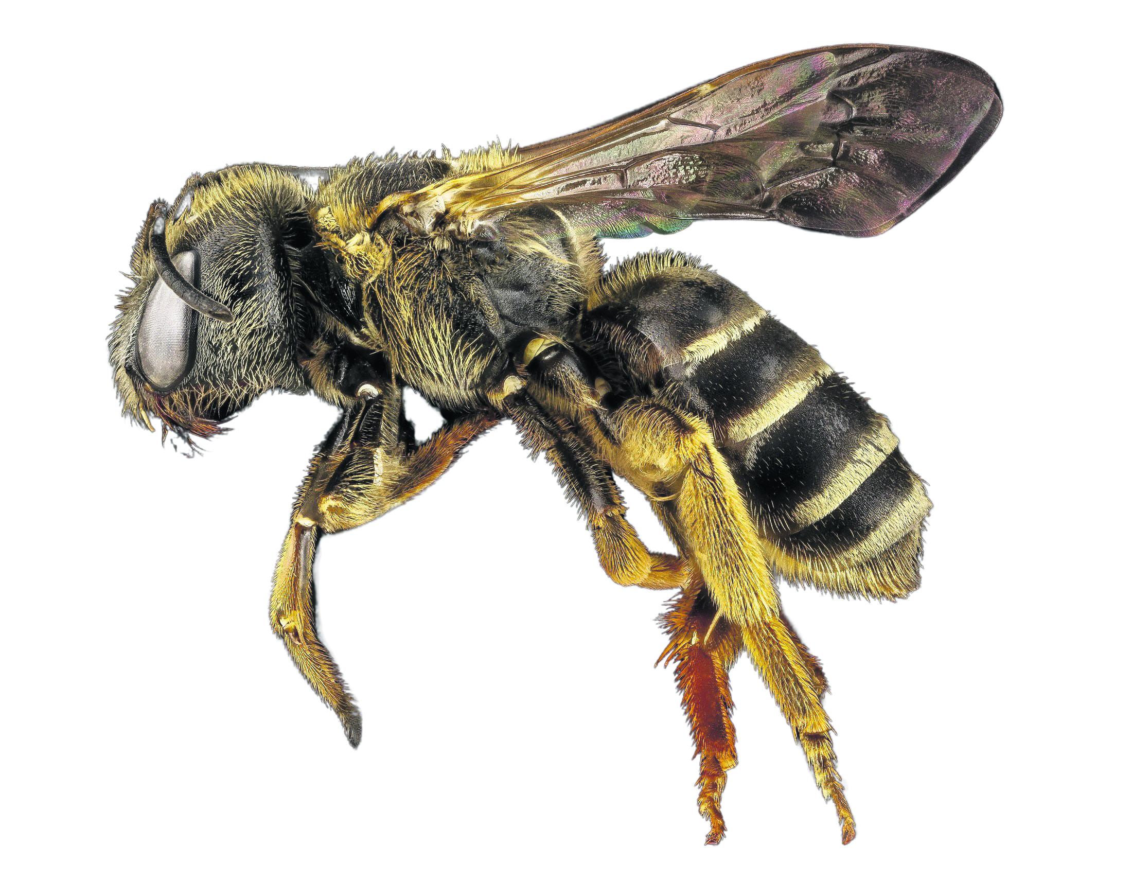 'Speurbij' (met BeeIeJee) is de nieuwe zoemende coronatester