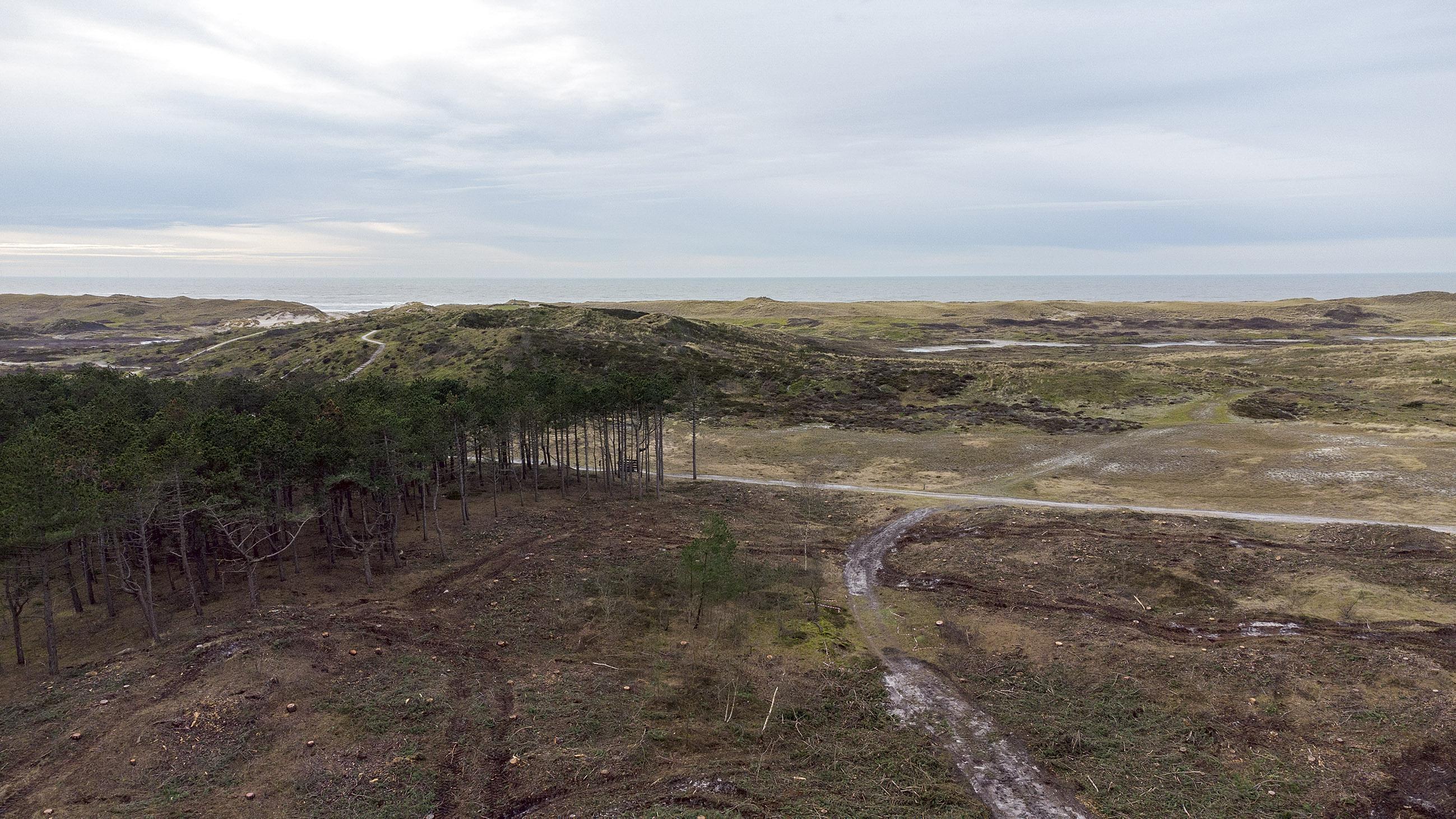 De omstreden bomenkap in het Dr. Van Steijnbos in Schoorl is afgerond, alle paden gaan weer open. 'Zeer voorspoedig verlopen'