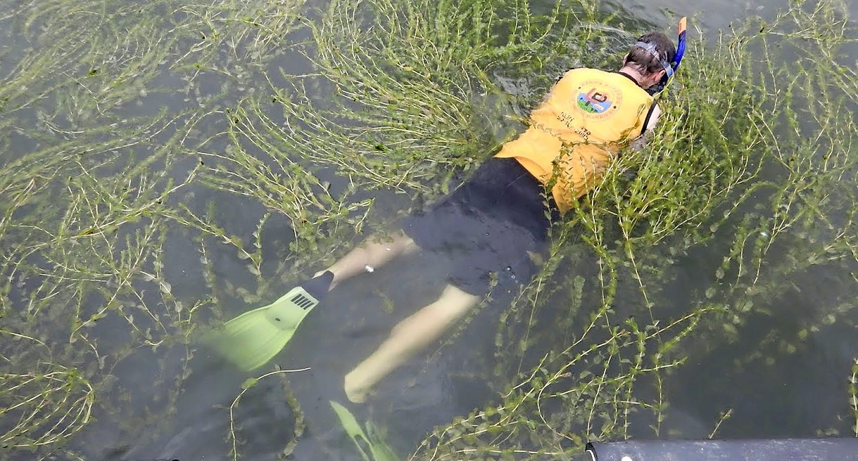 Harm en Arie omarmen het fonteinkruid: 'Waterplant is deel van ecosysteem Markermeer'