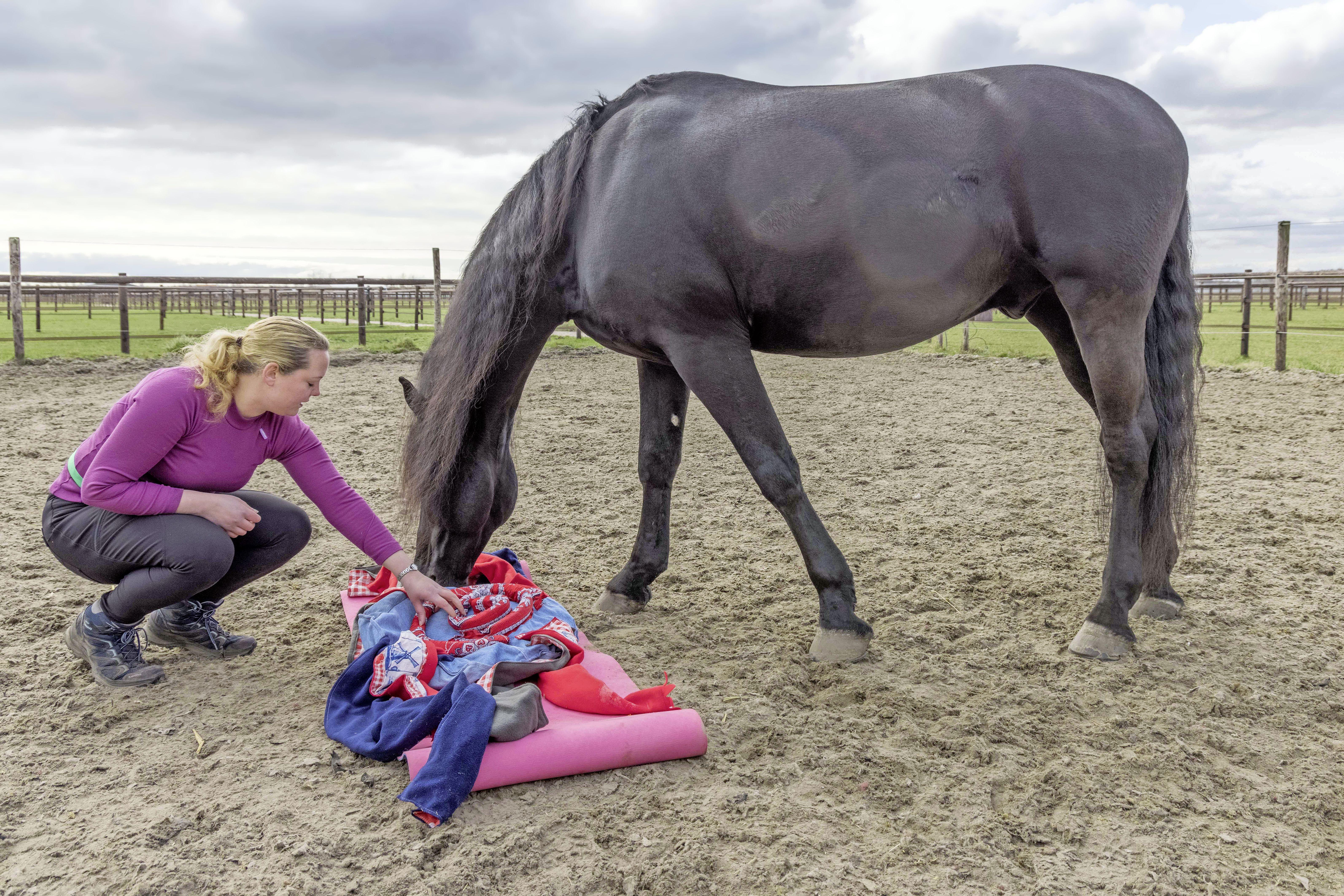 Hersenwerk voor paarden? Ruin Renze is meteen op zoek naar stukjes wortel