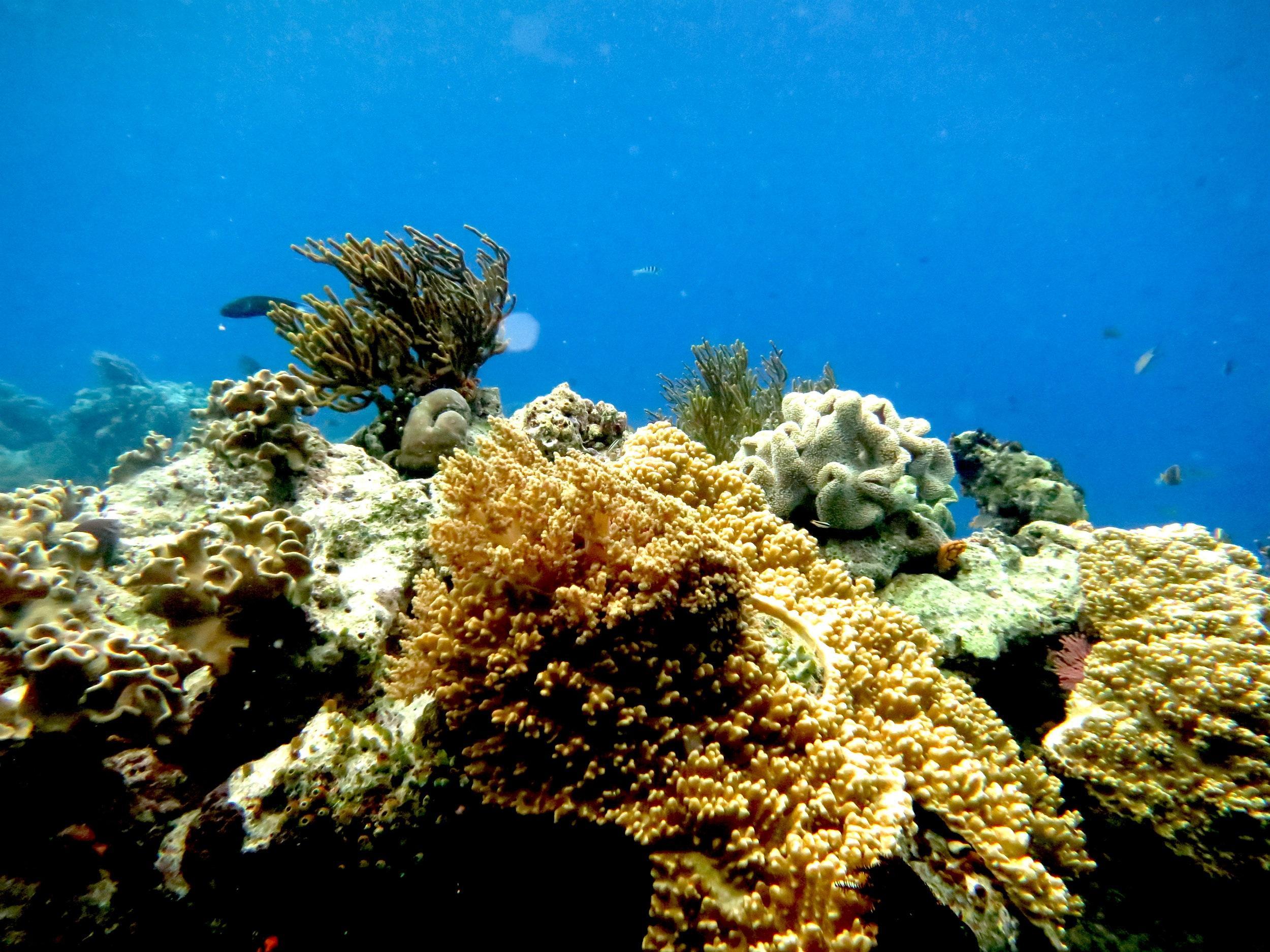 Terug naar rijk onderwaterleven in de Noordzee