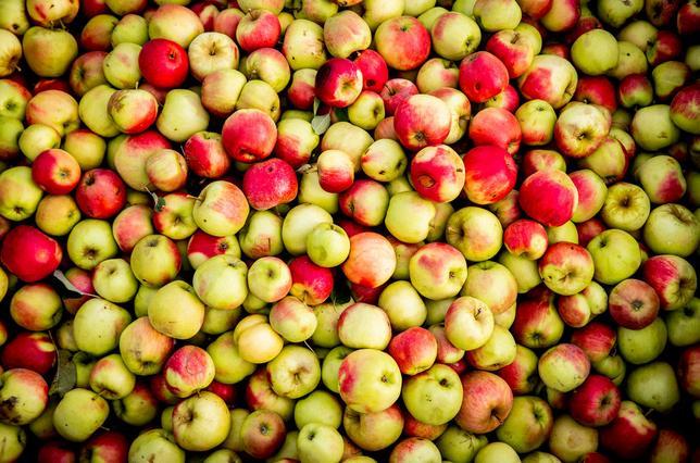 Leiden ziet voorlopig af van Boeren voor Buren; de fruitactie blijkt te duur