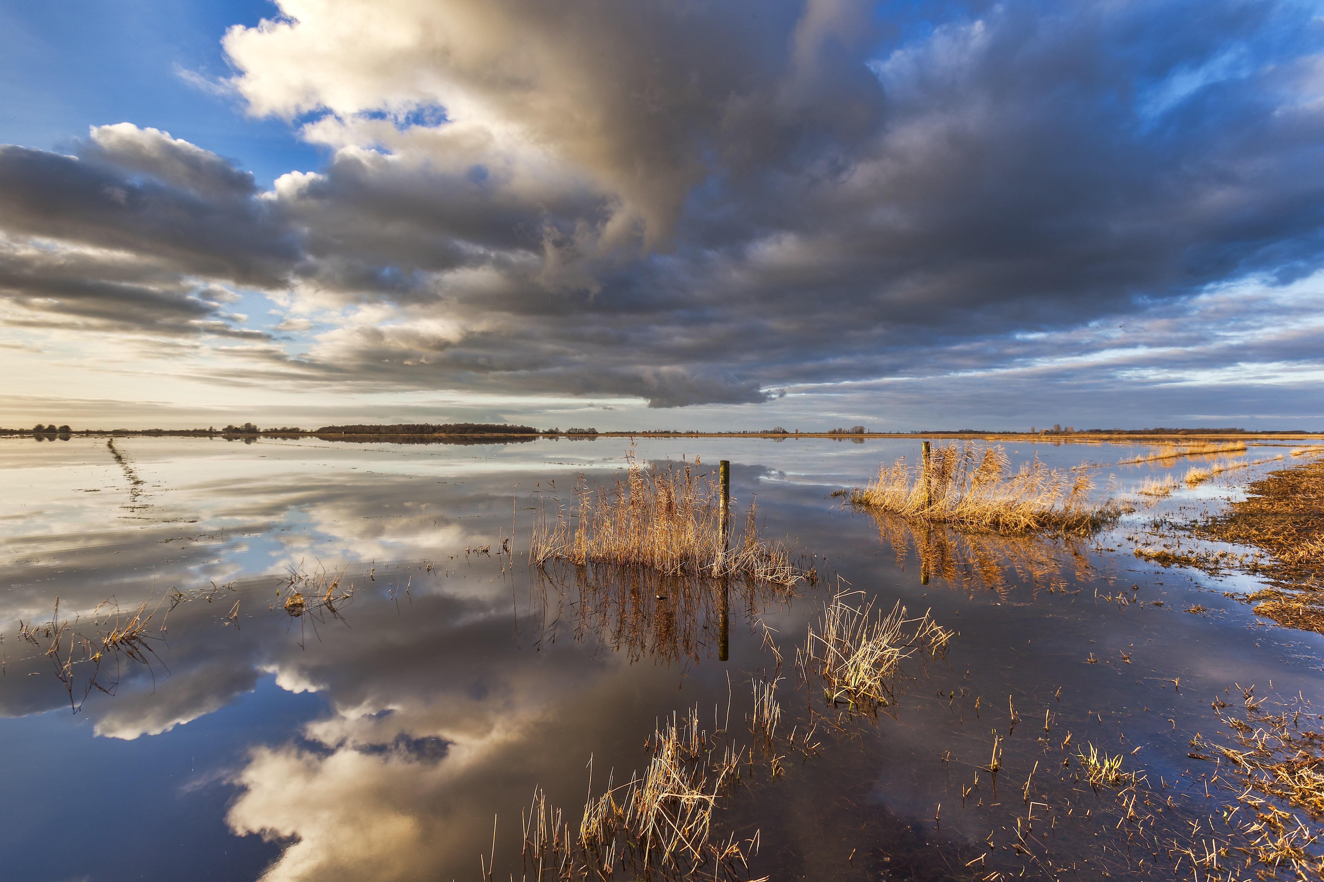 IJsselmeerkust moet meer deltagebied worden, waar vissen en vogels optimaal aan hun trekken komen