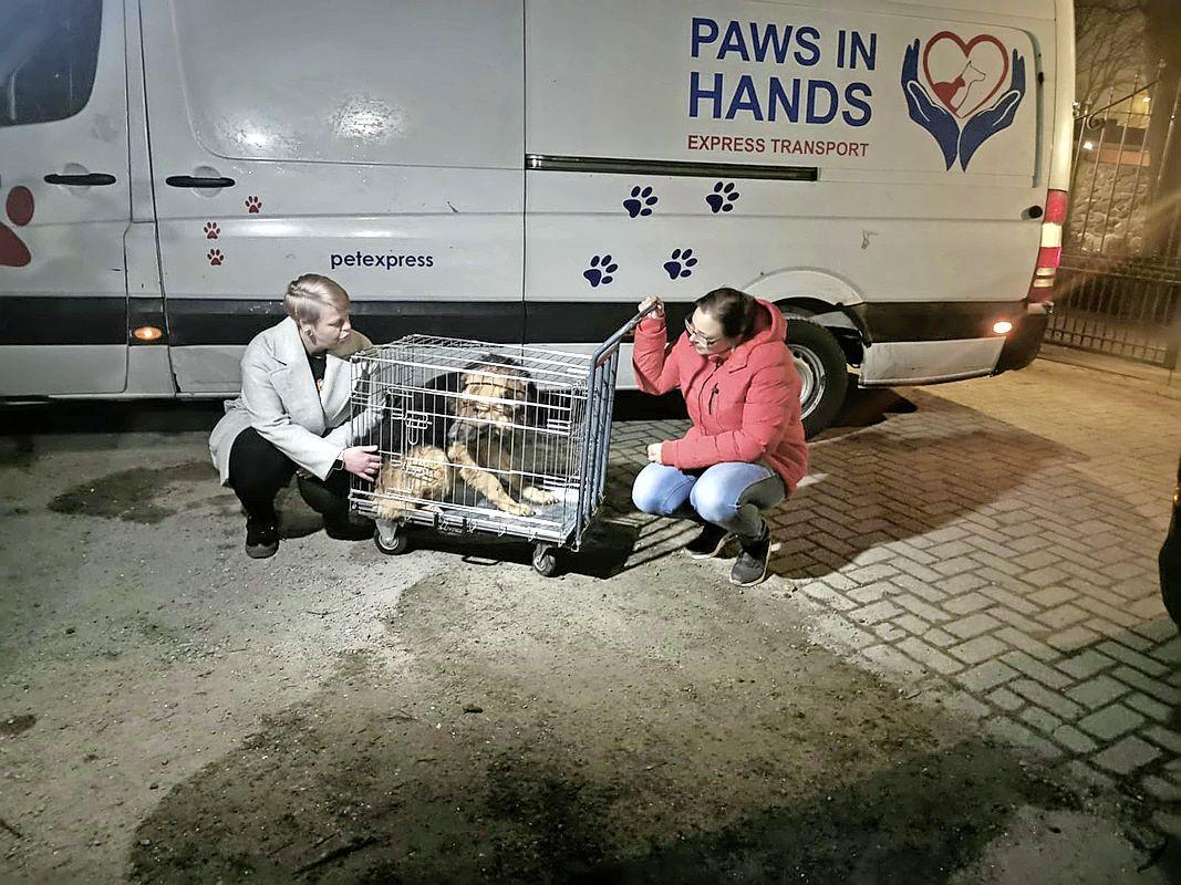 Honden die in Roemenië in de dodencel zaten, zitten nu in Beverwijkse dierenpension, in afwachting van een nieuw baasje