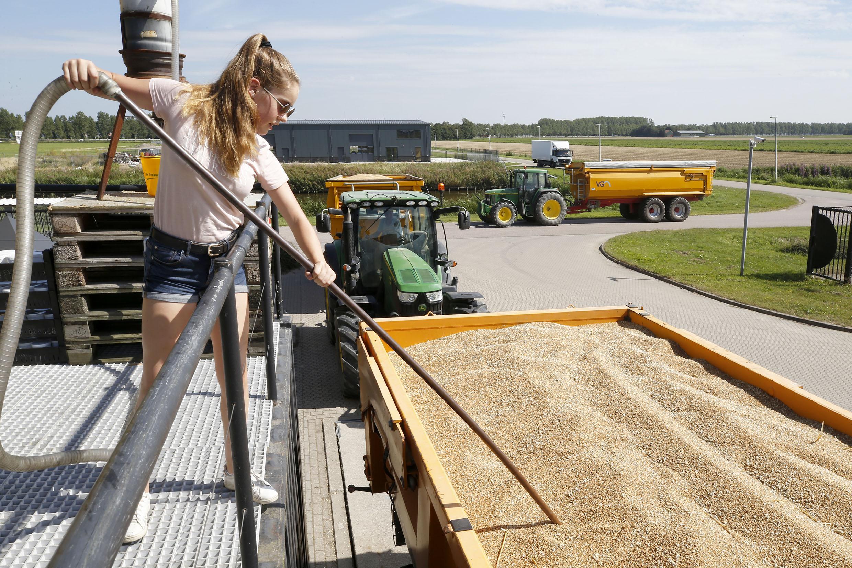 Minder grote graanoogst door slecht weer in het najaar, maar het kan nu vanwege de droogte op tijd van het land