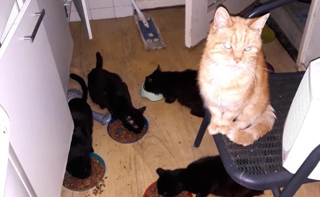 Katwijks huis vol katten verbijstert politie en Dierenbescherming: 'Bizar hoeveel uitwerpselen er lagen'