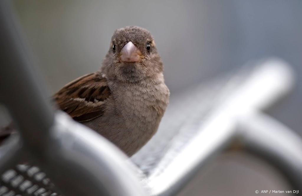 Recordaantal Nederlanders telt vogeltjes in de tuin