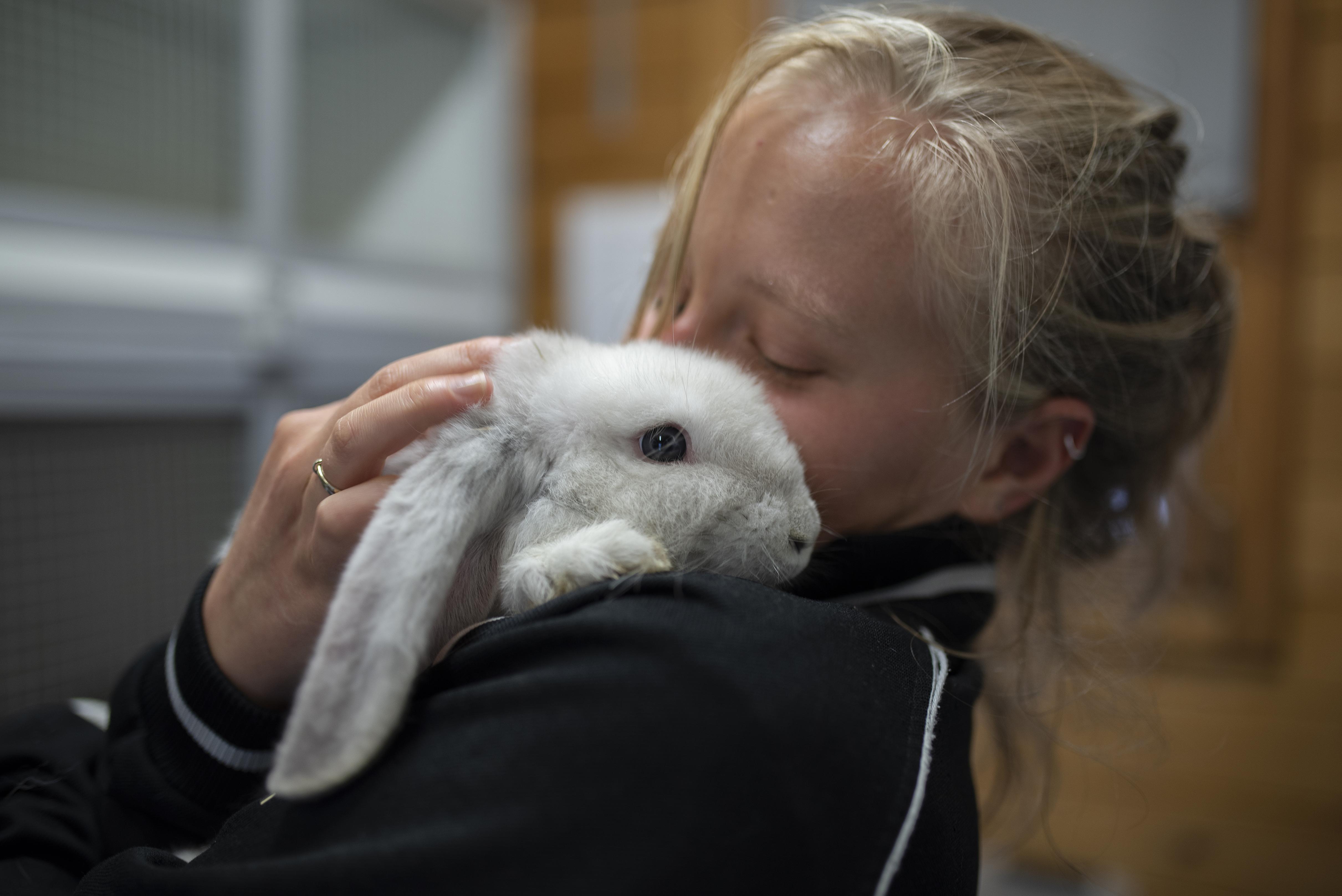 4 oktober is dierendag, maar veel dieren zitten zonder baasje. Het Kerbert Dierentehuis en Knaagdierencentrum in IJmuiden stomen verwaarloosde dieren liefdevol klaar voor adoptie