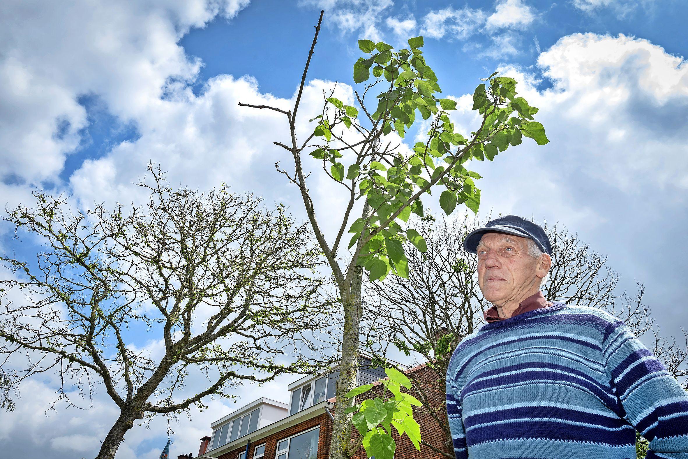 Haarlemmer telt zeker honderd dode bomen in Noord en het centrum. Herplant kan jaren duren. 'Het ziet er armoedig uit'