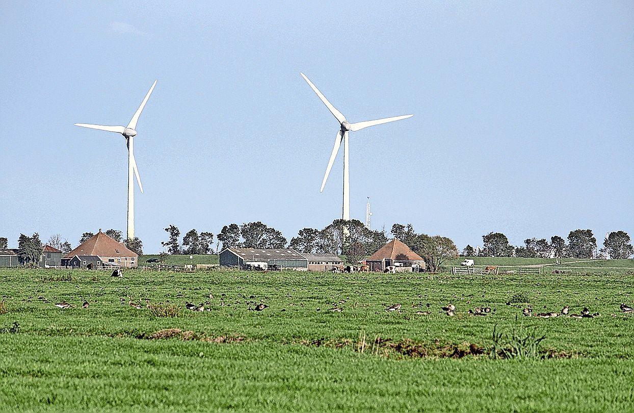 Eilandraad verspreidt een eigen enquête over het plaatsen van windmolens op de dijk naar Marken