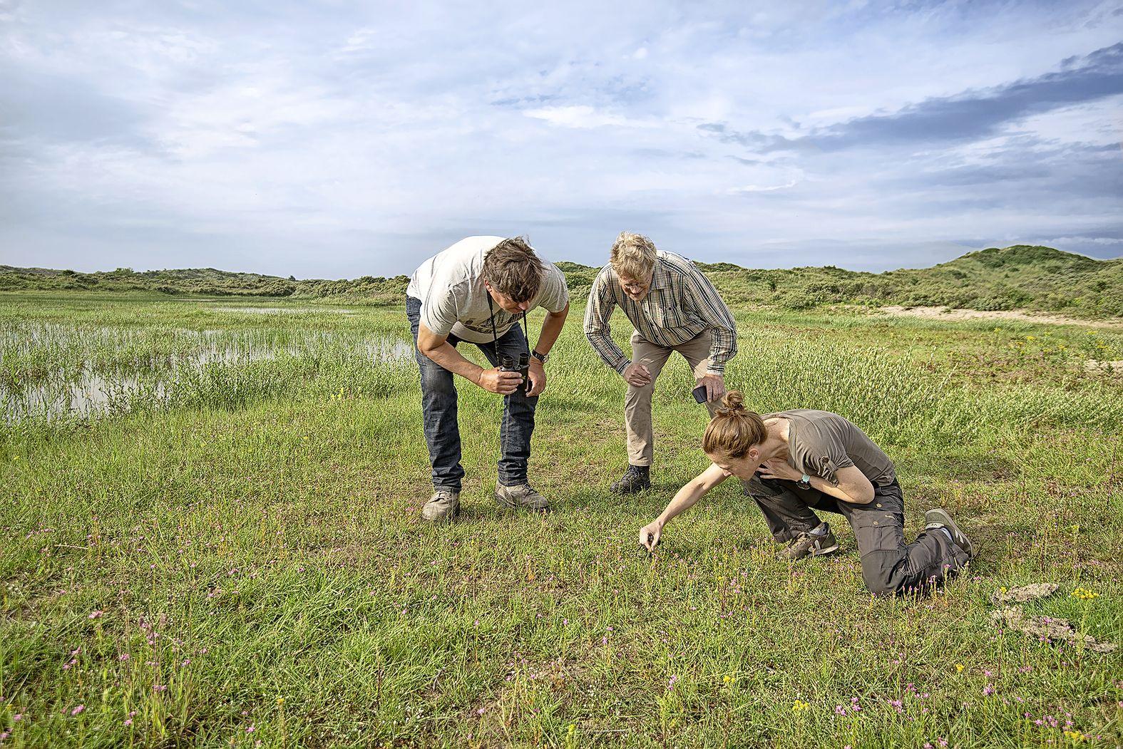 Van vogeltelpost tot strandpaal: nieuwe route rond Vogelmeer in Nationaal Park Zuid-Kennemerland
