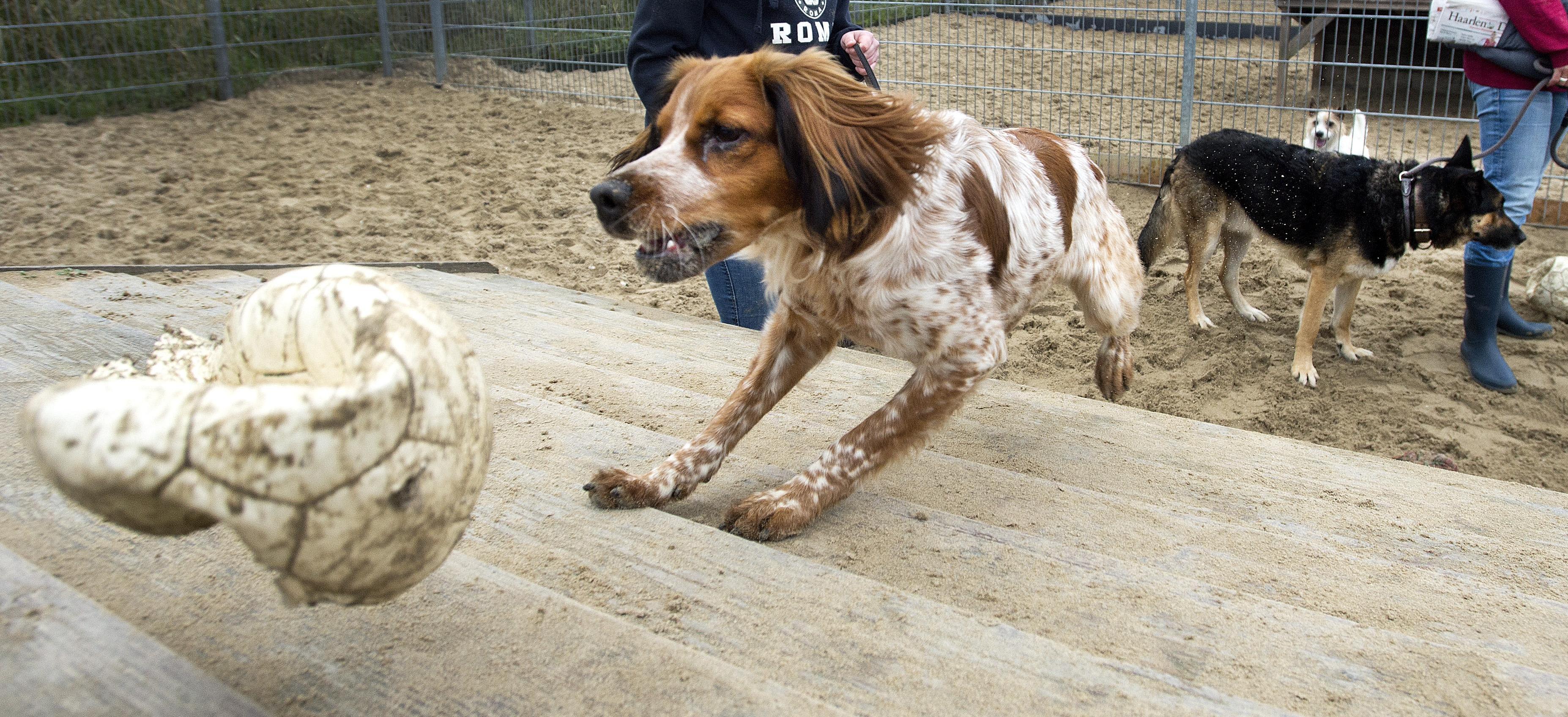 Voor zeker 162 honden geen belasting betaald in Haarlemmermeer; poldergemeente telt volgens de officiële cijfers 8776 viervoeters