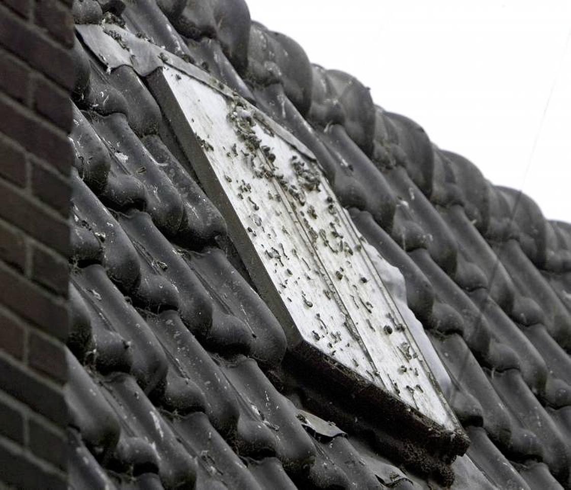 Gemeente Bergen moet meer doen tegen poepende duiven, zegt de Raad van State. Want de daken zijn weer één grote smeerzooi door de voerende buurvrouw