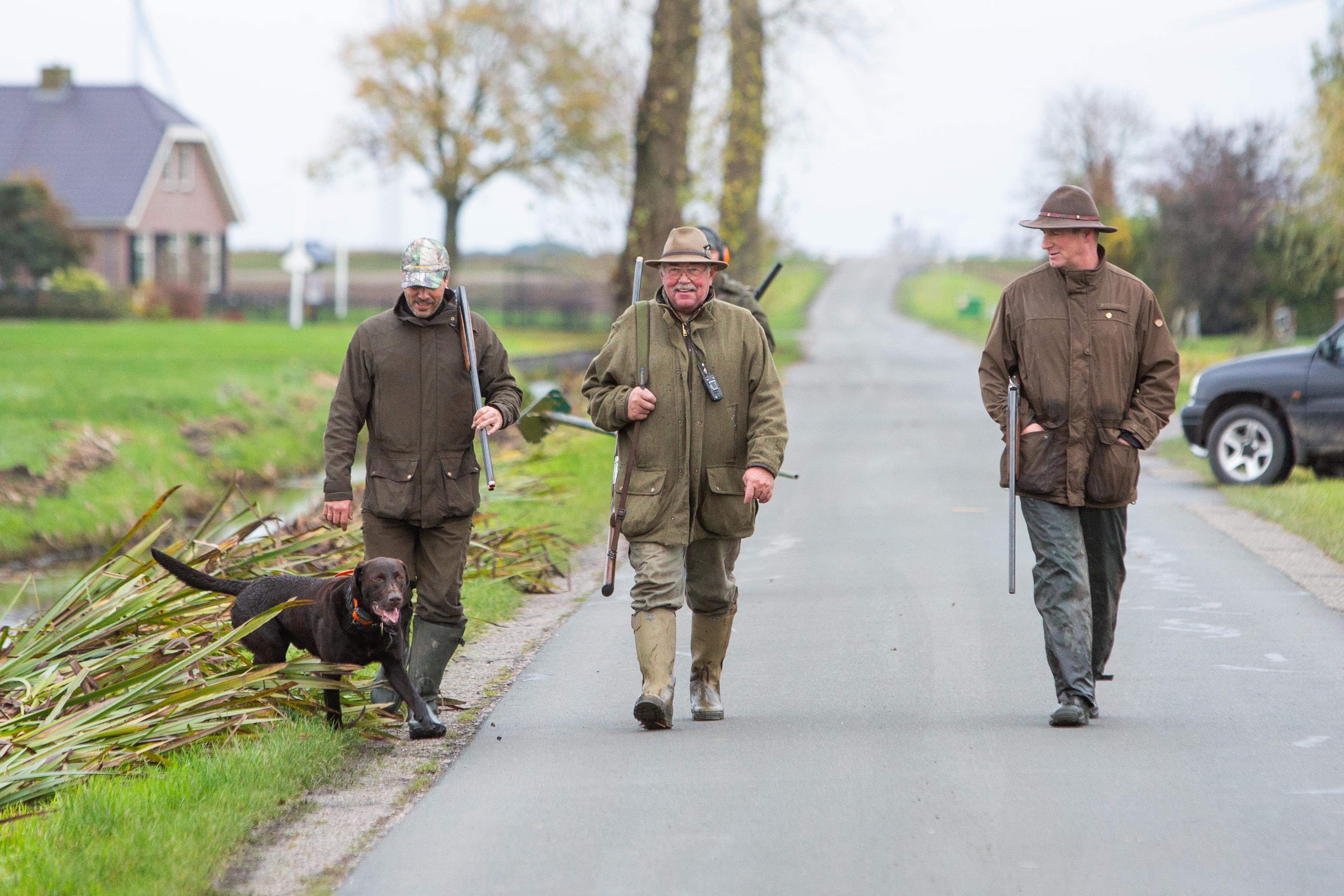 Provincie Utrecht verleent vergunning voor afschieten knobbelzwanen, jager Jan Hoolwerf legt uit waarom; 'Maar geen enkele jager schiet voor de lol een zwaan'