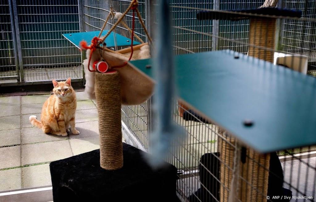 'Afgelopen maanden meer honden en katten weggedaan'