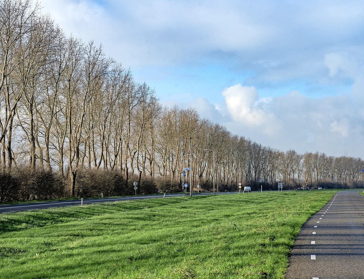 Ontzetting over kappen van 245 bomen tussen pont Buitenhuizen en Beverwijk: 'Dit is echt ongehoord'