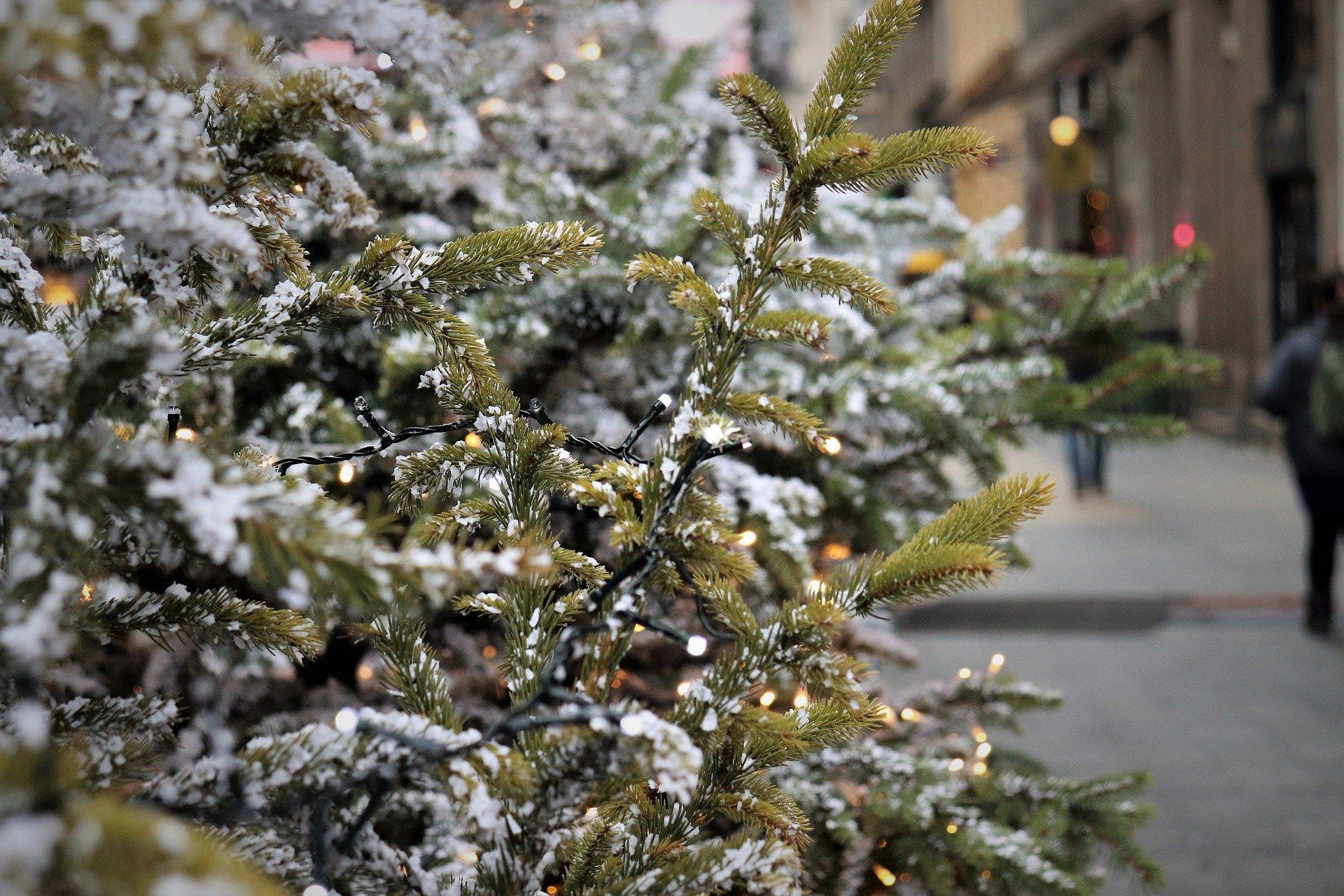 Kerstbomen inzamelen voor geld, prijzen en traditionele brandstapel