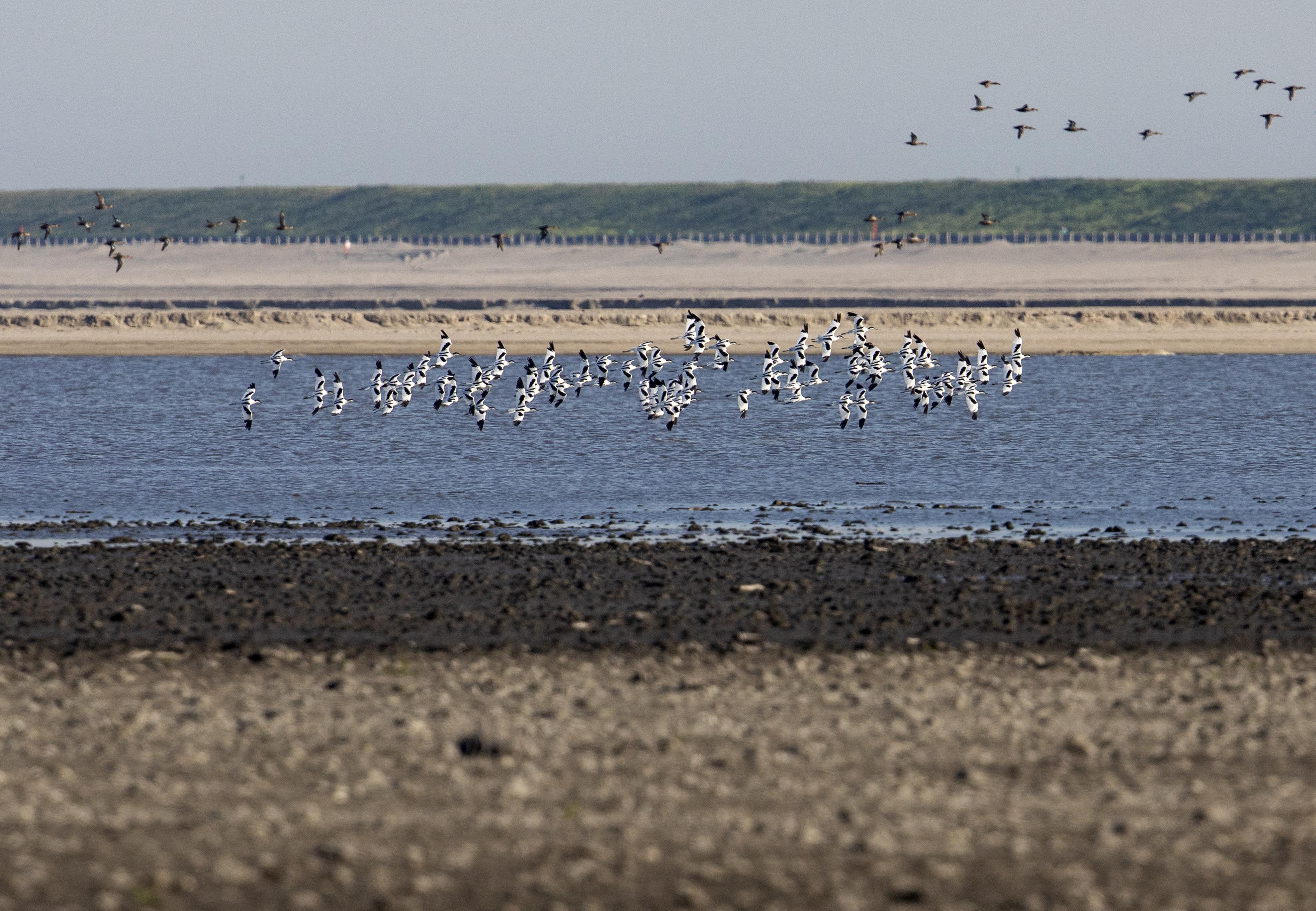 Golfbreker van 26 kilometer kan weer decennia mee: minister Cora van Nieuwenhuizen sluit bijzonder versterkingsproject Houtribdijk af