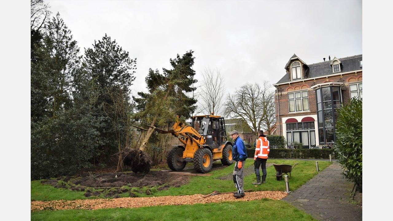 Kerk maakt van de nood een deugd: de herstelde Corneliuskerk heeft nu ook een permanente kerstboom
