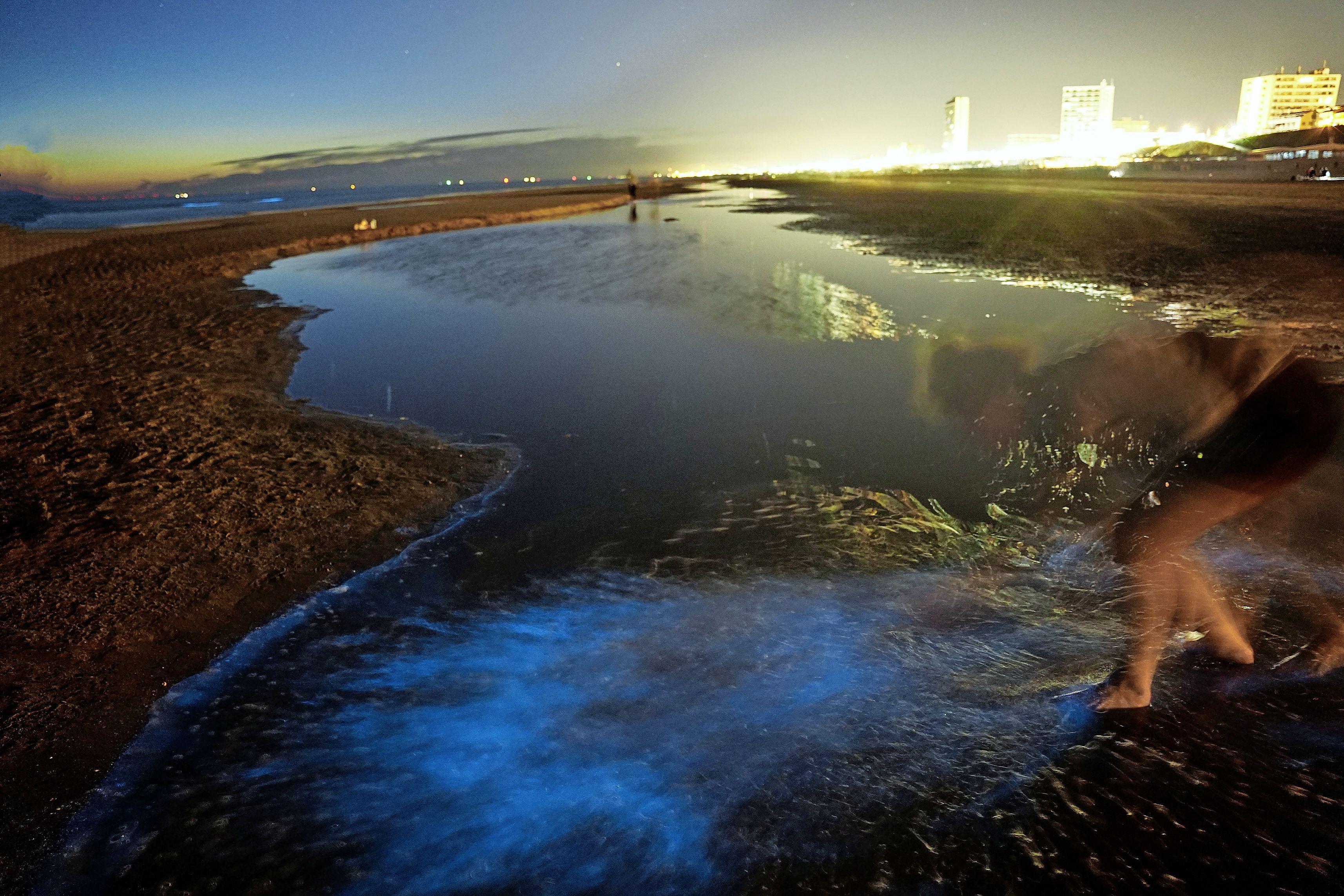 Opwinding alom: zeevonk duikt 's nachts weer op in Zandvoort. 'Zodra het gaat schemeren is de magie eraf'