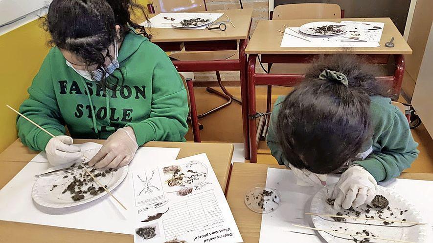 Hoeveel muizenbotten zitten er eigenlijk in een uilenbal? Hertenkamp mag natuur weer in school brengen