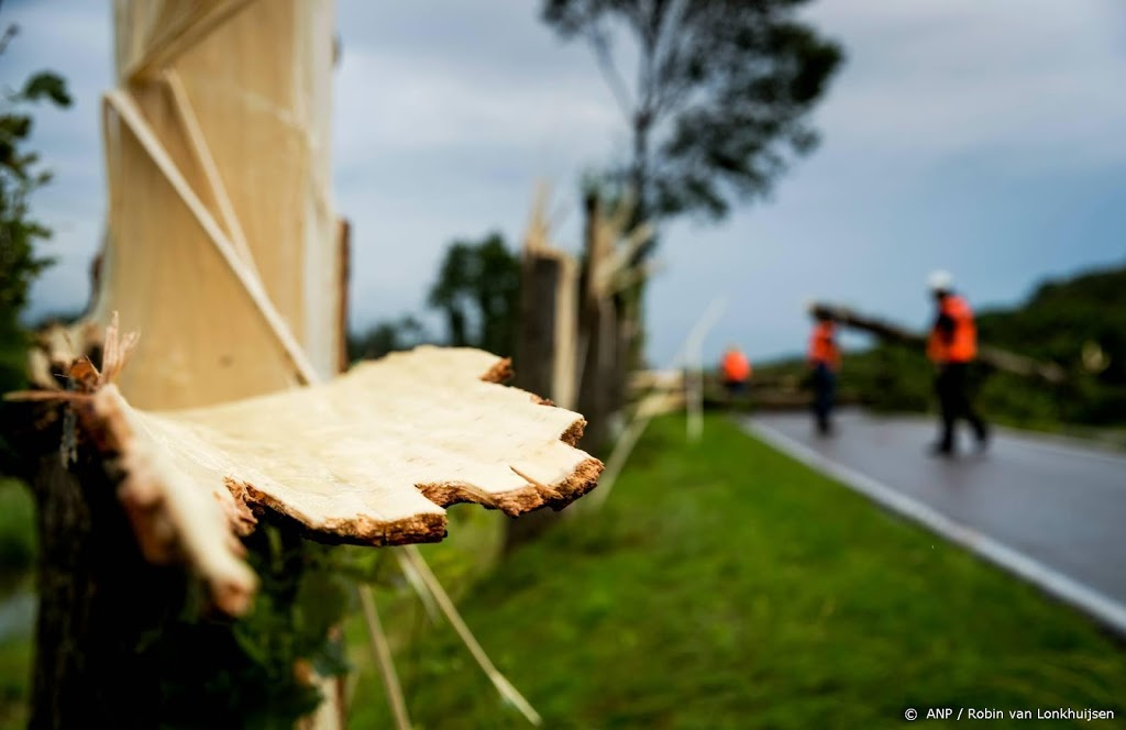 Omgewaaide bomen en bieten op de weg door windstoten
