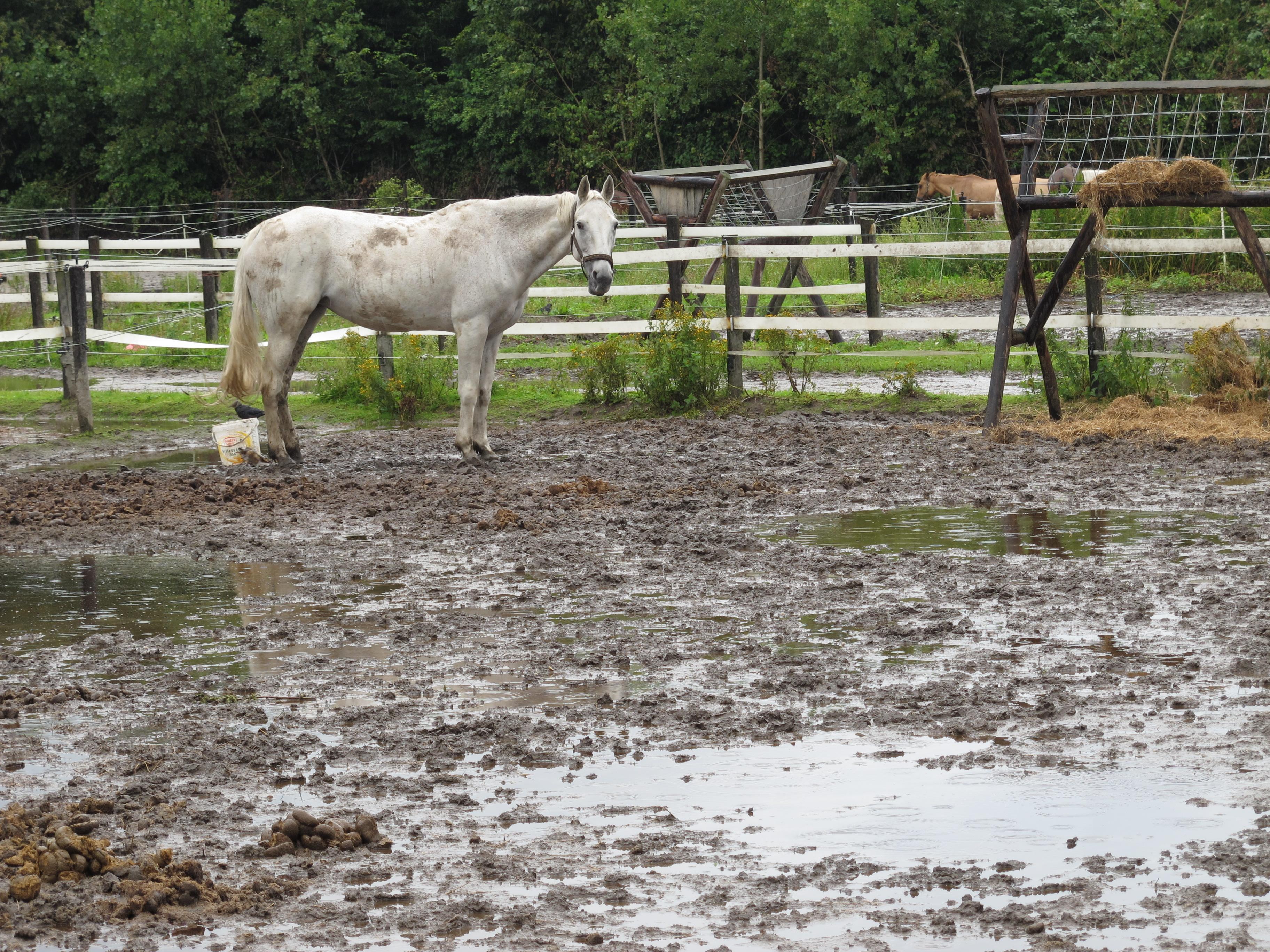 Teylingen maakt tien paardenweitjes weer bollengrond