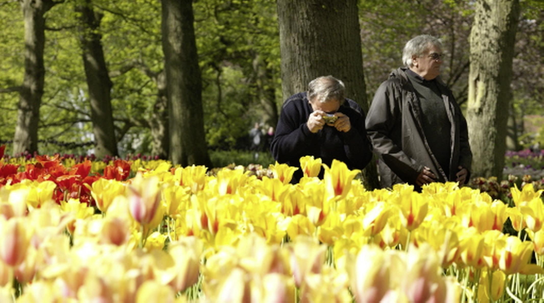 Directeur Keukenhof snapt niet dat de bloementuin na testweekend weer moet sluiten voor publiek: 'We kunnen iedere dag veilig open'