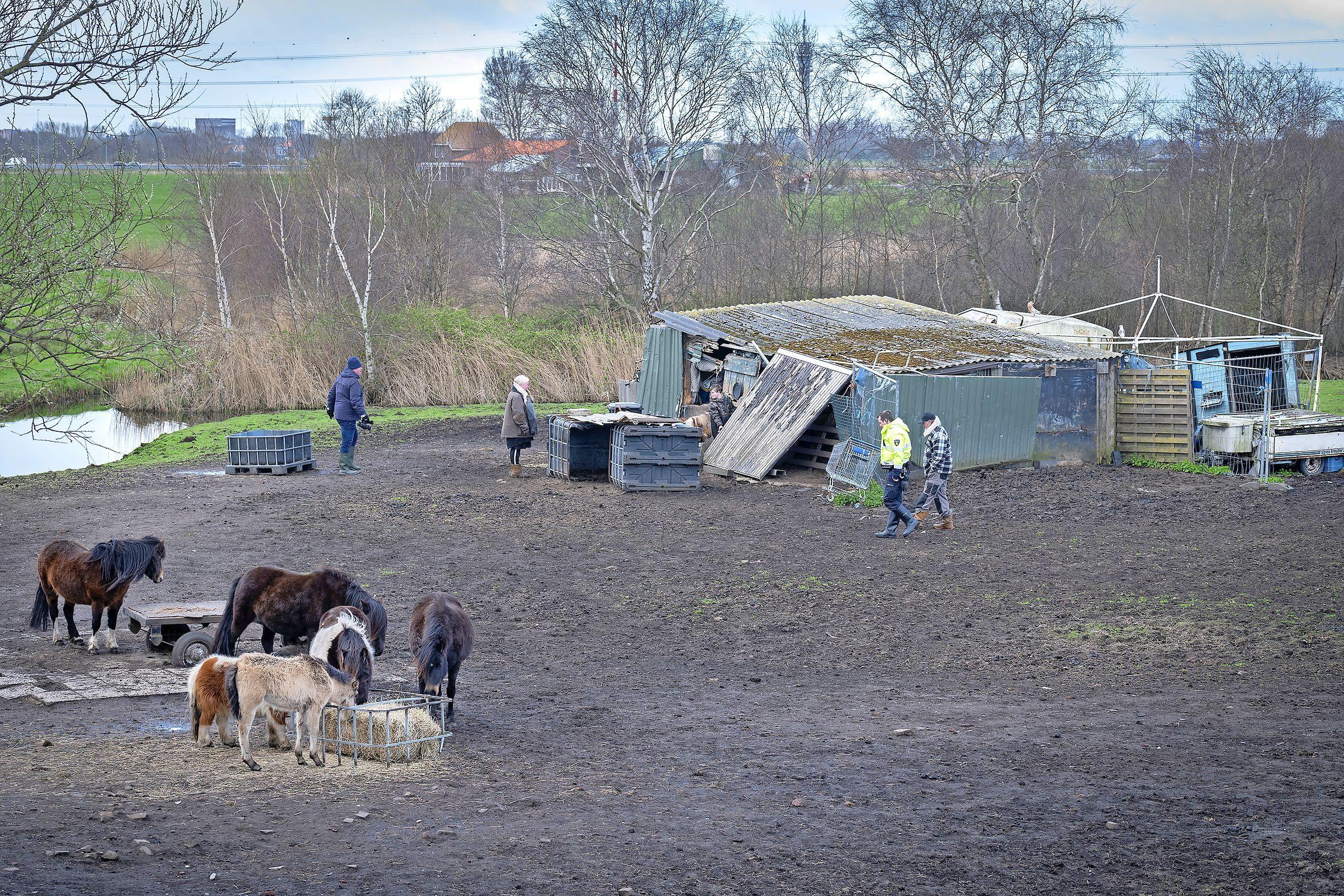 Politie haalt verwaarloosde dieren weg uit weiland in Spaarndam