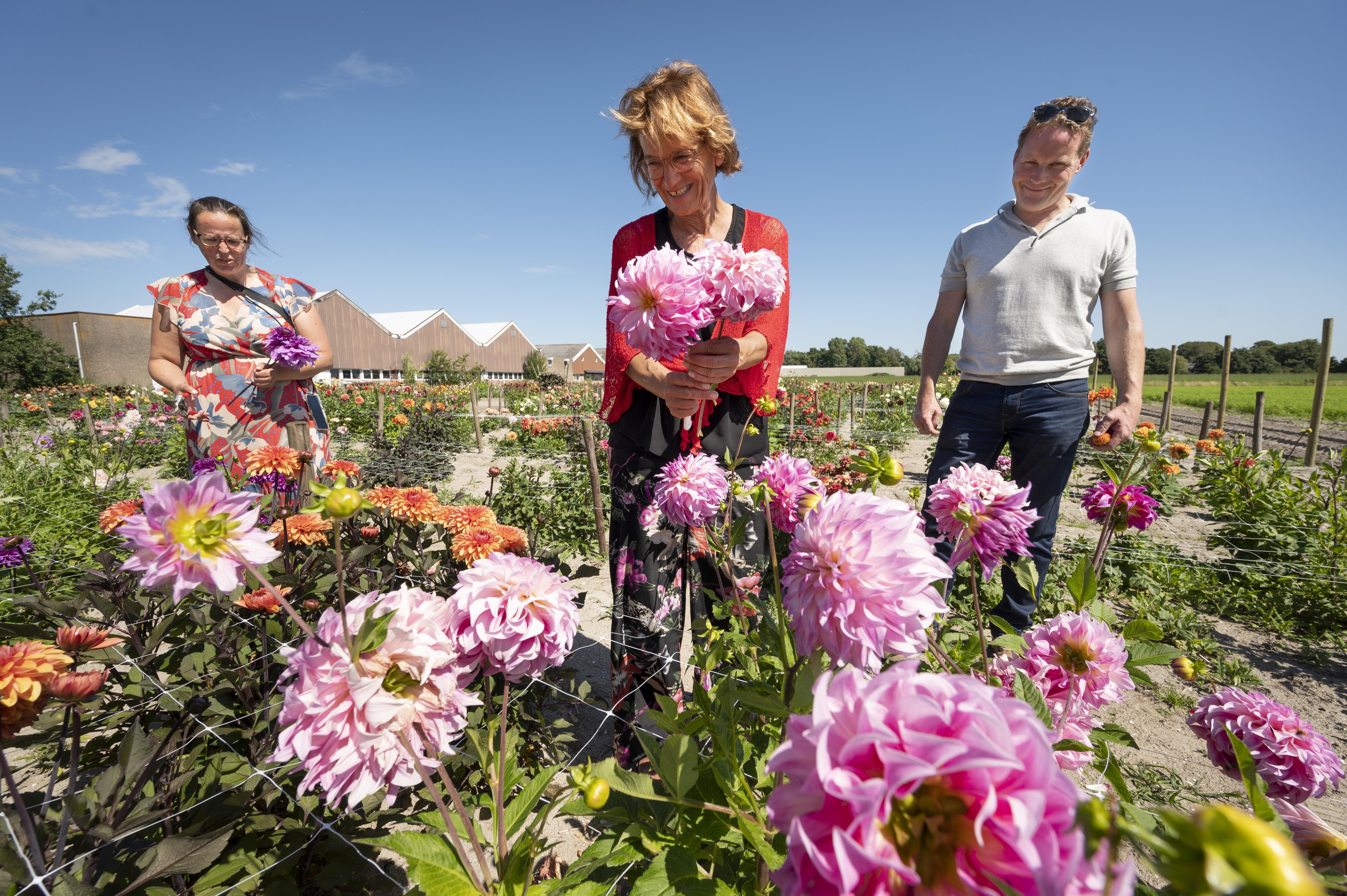 Bloggers maken boerenplant populair; Holland Dahlia Event in Bollenstreek dit jaar kleinschalig door corona