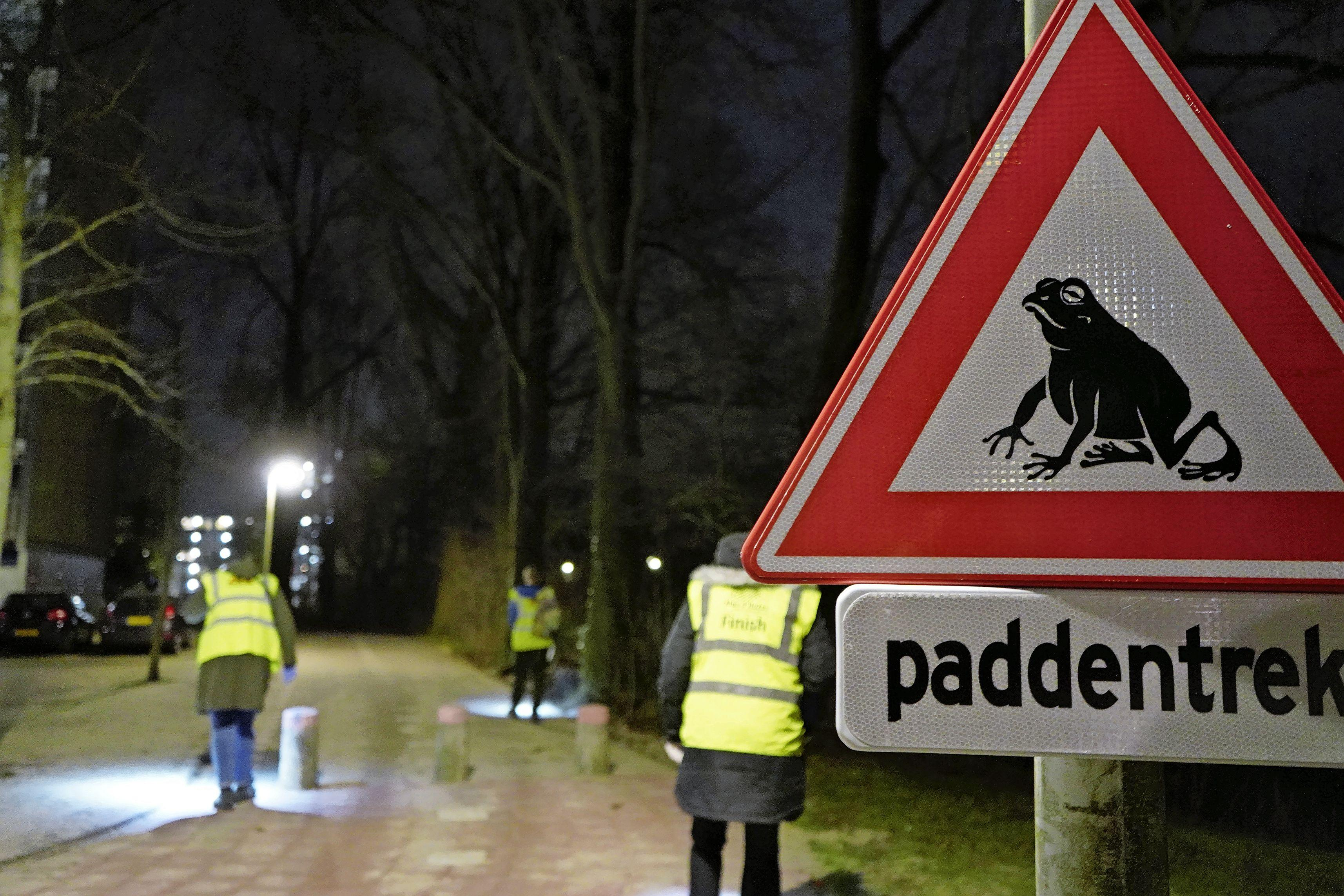 Op pad met paddenpatrouille: 'Amfibieën helpen bij de oversteek van het fietspad'