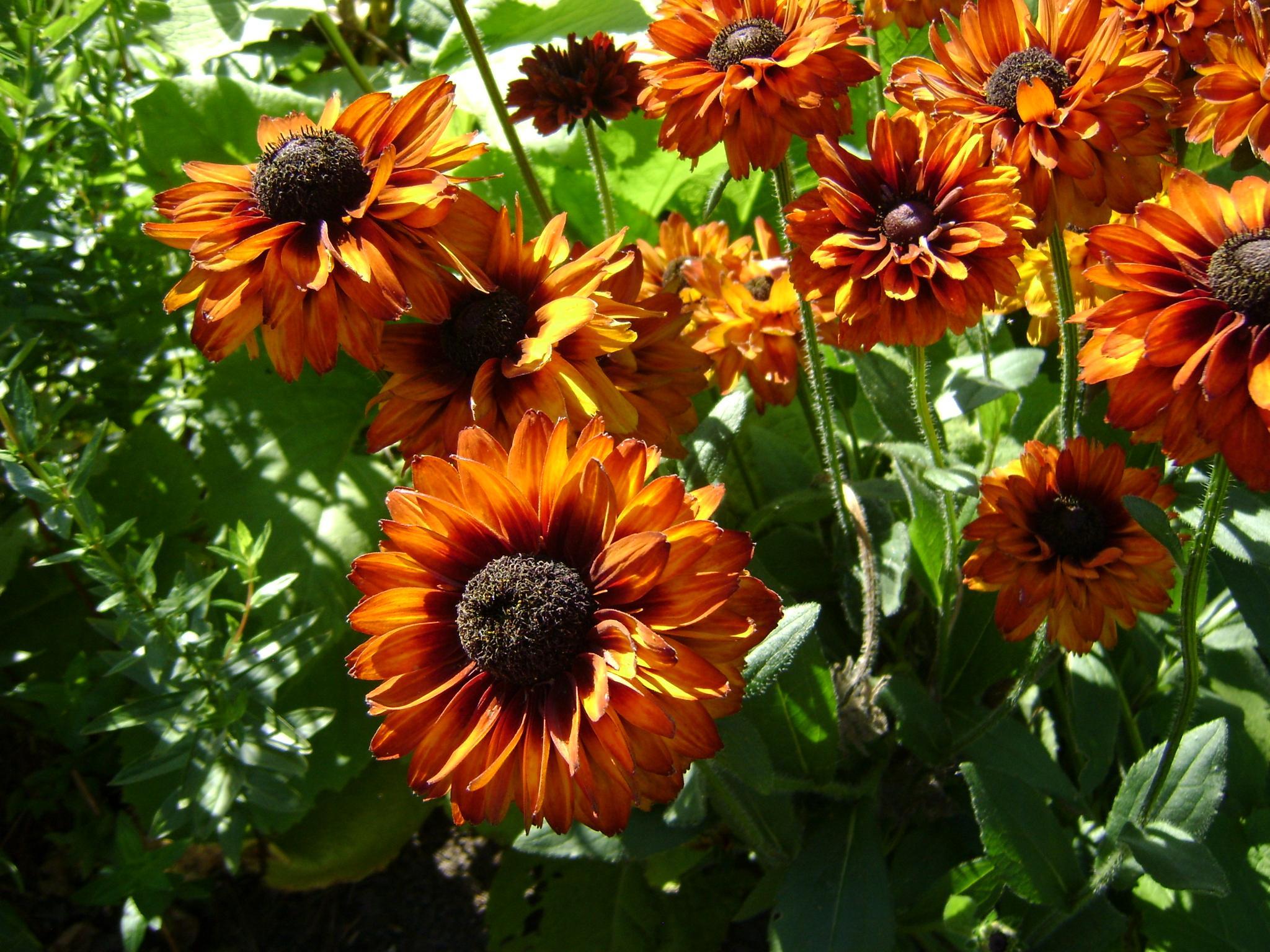 Genieten van de groene vingers van een ander: particuliere tuinen in de Noordkop open voor publiek
