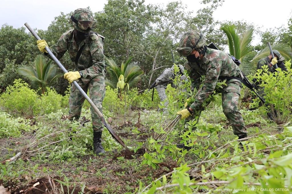 Colombia vernietigt recordhoeveelheid cocagewassen