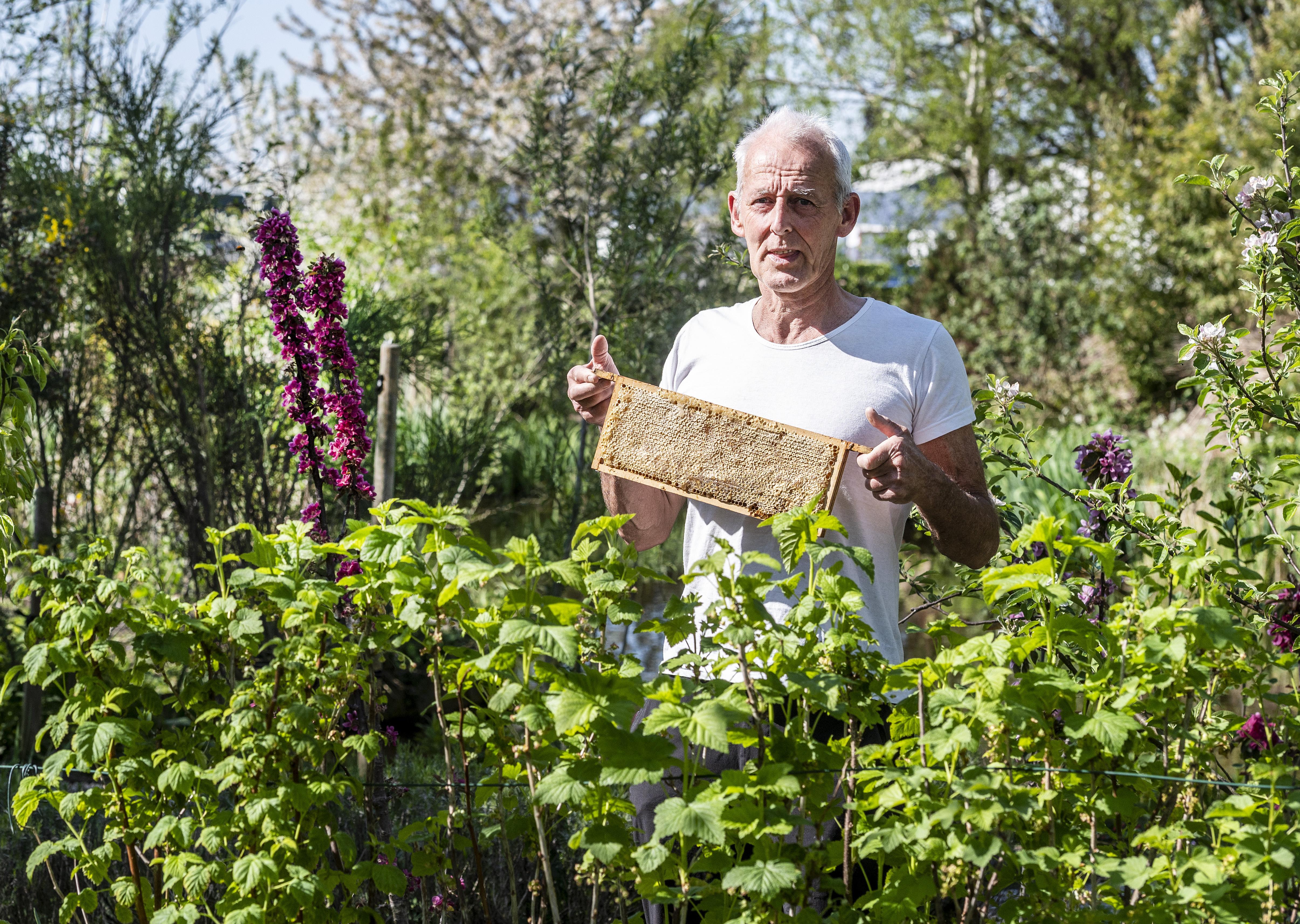 Bijenplantjes voor een prikkie tijdens Zaaidagen: Hillegom op weg naar meer bijvriendelijkheid
