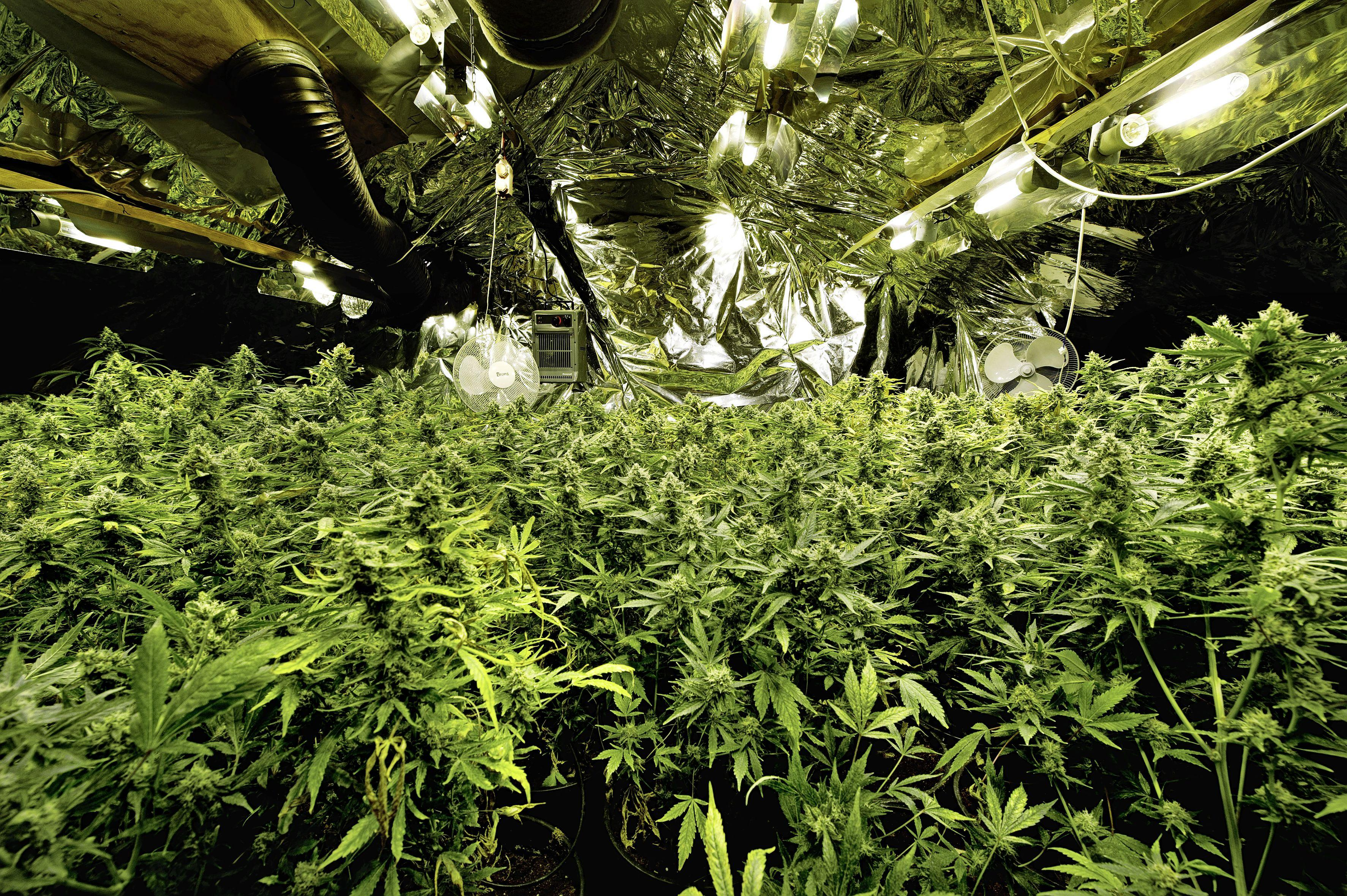 Limmenaar (74) wordt voor 'slechts' 5050 in plaats van 134.390 euro 'geplukt' vanwege wietplantage in tuinhuis