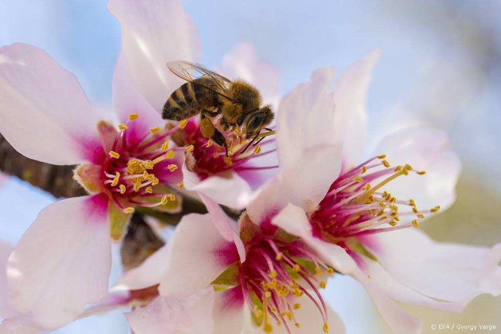 Duizenden mensen tellen recordaantal bijen