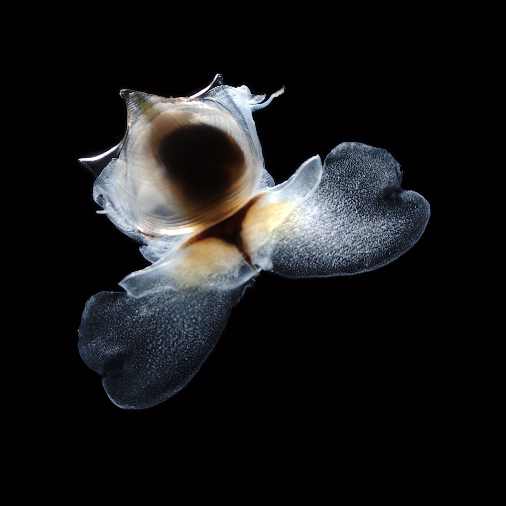 Diepzee-onderzoek van Naturalis centraal in derde aflevering van NPO2-serie 'De Toren'