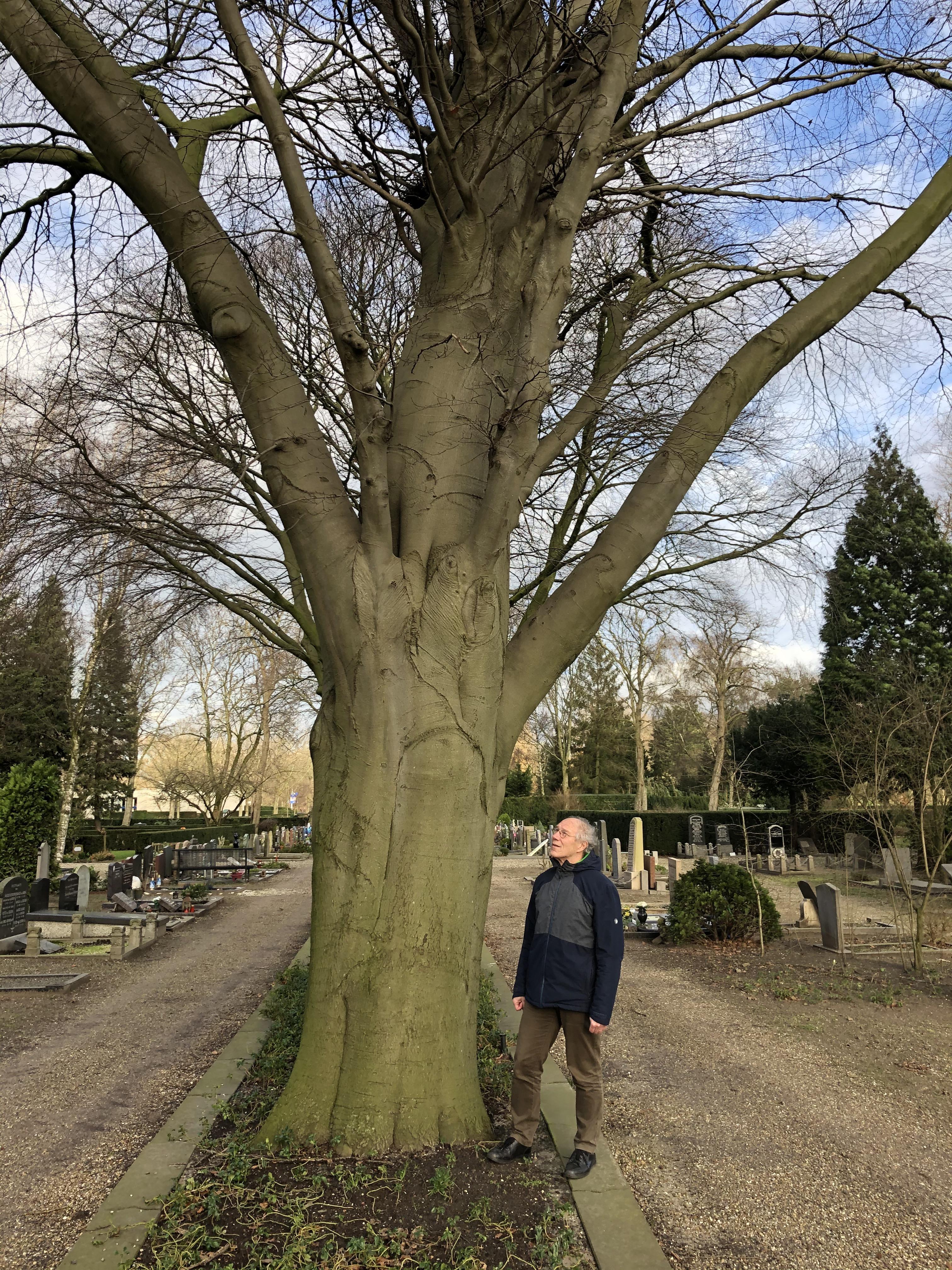 Niet het aantal bomen, maar kroonbedekking telt voortaan in Zaanstad