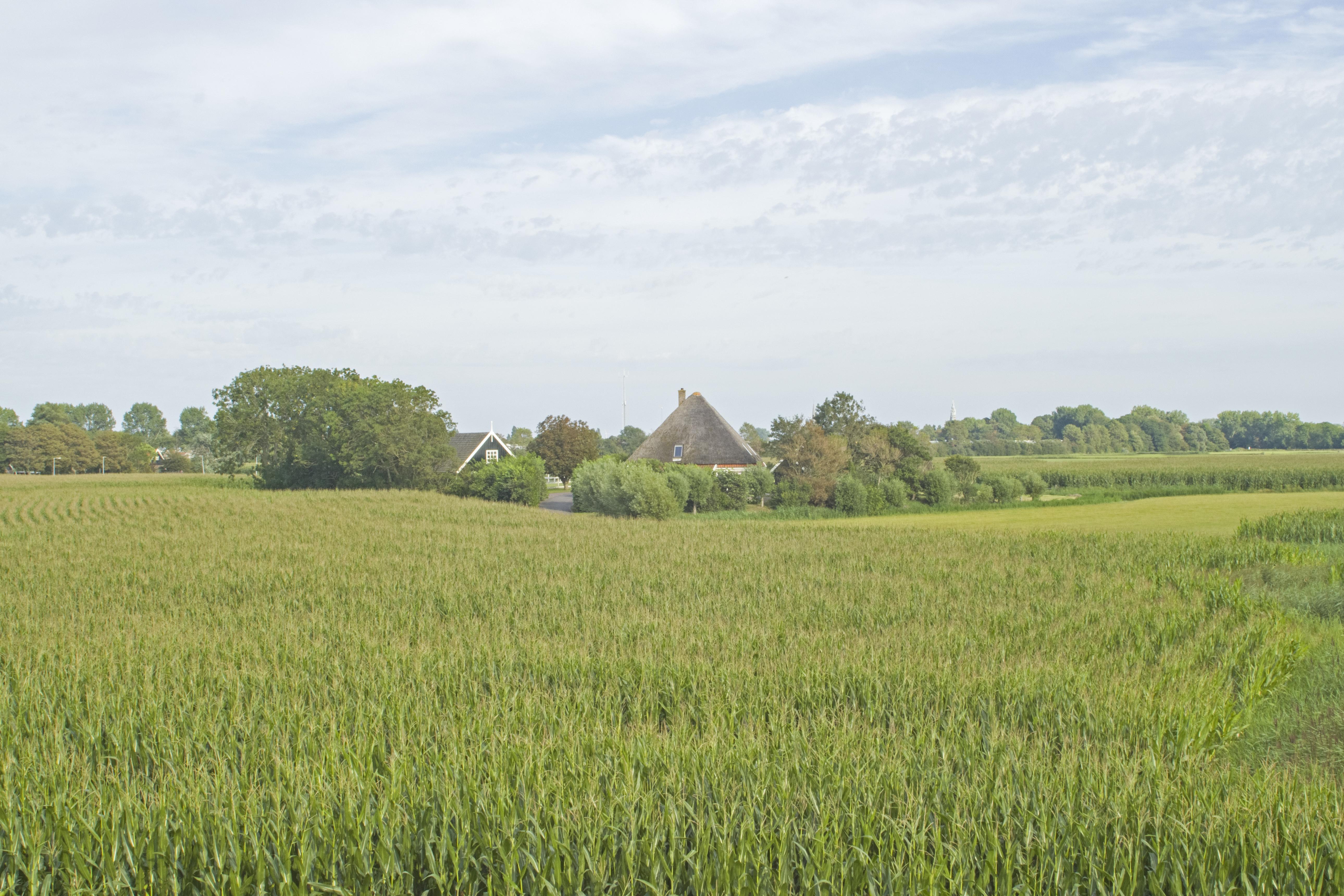Wonen op Hemkewerf, de hoogste en grootste terp van Schagen. Eerste rang, op niveau