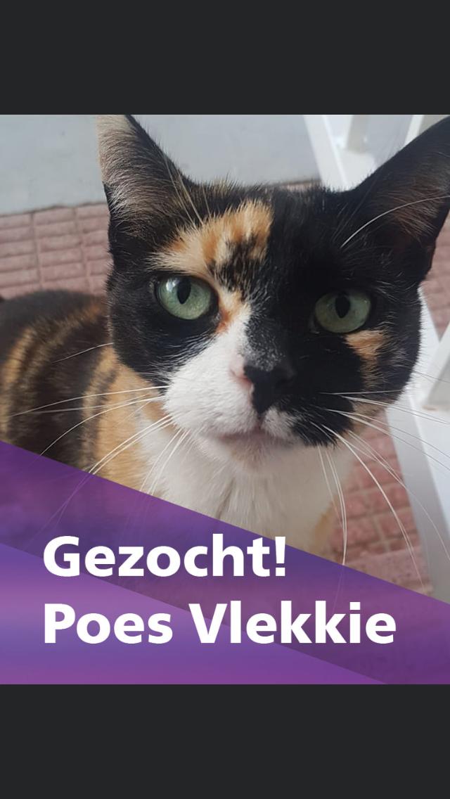 Zoekactie naar ontsnapte poes Vlekkie op Schiphol