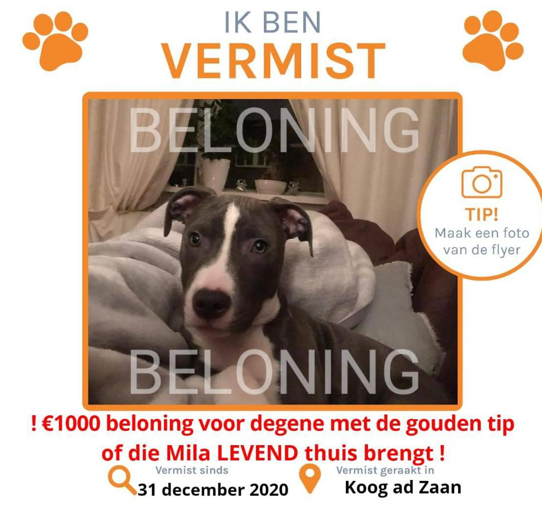 Beloning van duizend euro voor terugvinden hond Mila uit Koog aan de Zaan. Geschrokken van vuurwerk