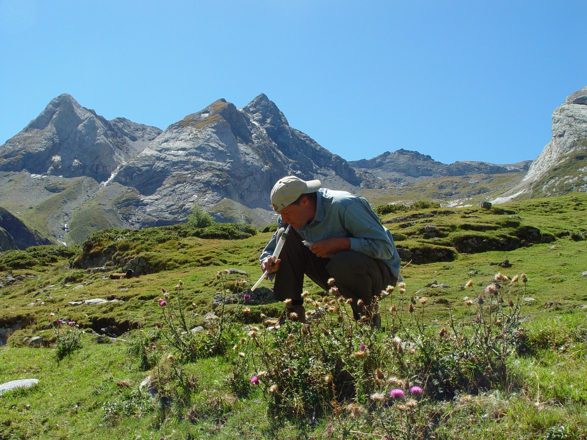 Bijen in de Pyreneeën leven tegenwoordig 130 meter hoger dan aan het eind van de 19de eeuw