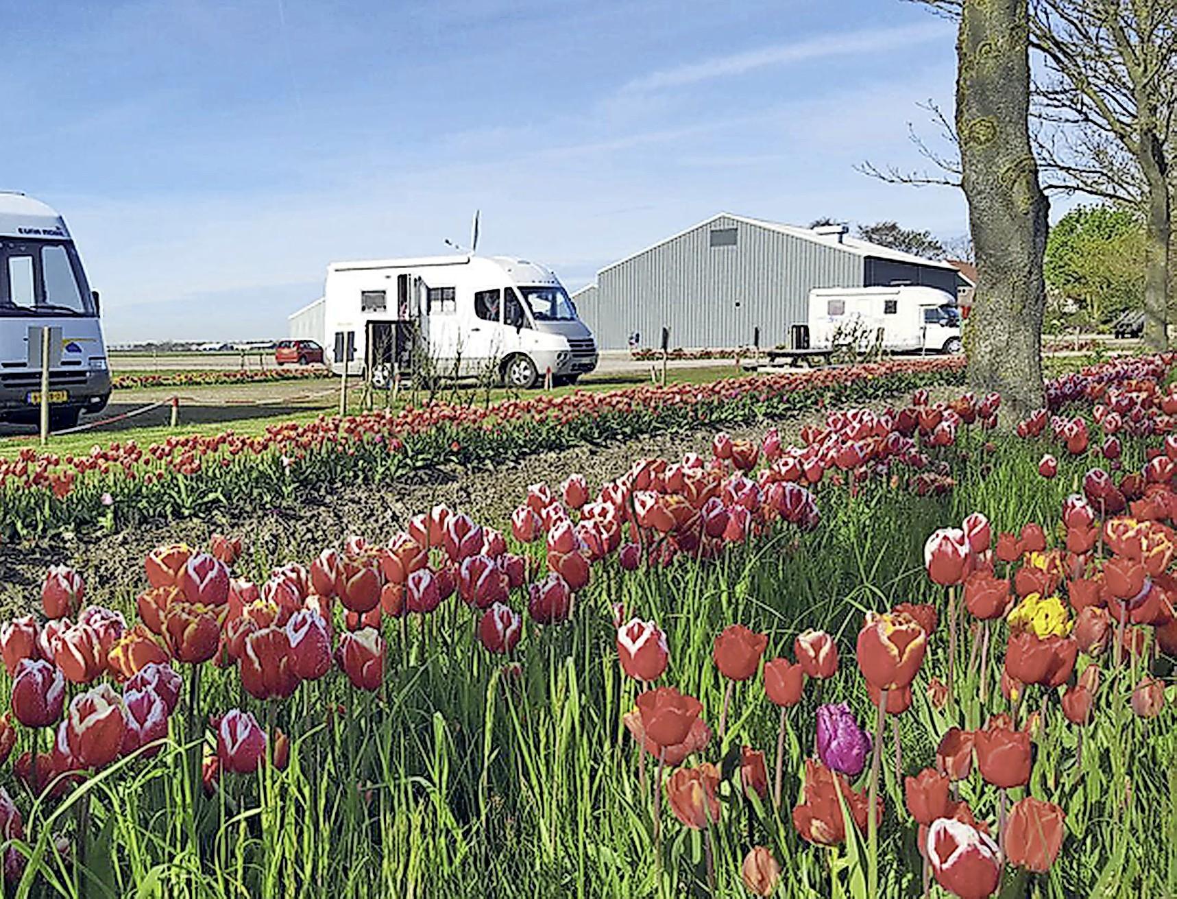 Per camper in het spoor van de tulp langs het IJsselmeer