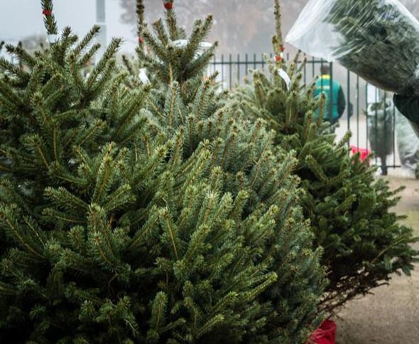 Kerstbomen regio Hilversum na jaarwisseling opgehaald