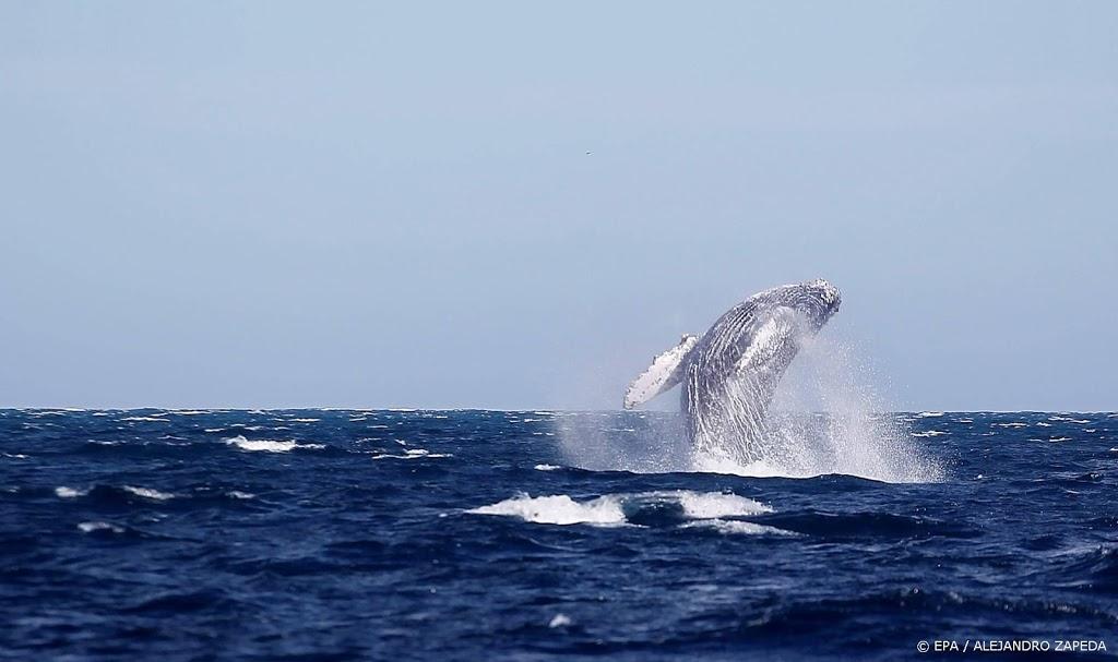 'Amerikaanse kreeftenvisser uitgespuugd door walvis'