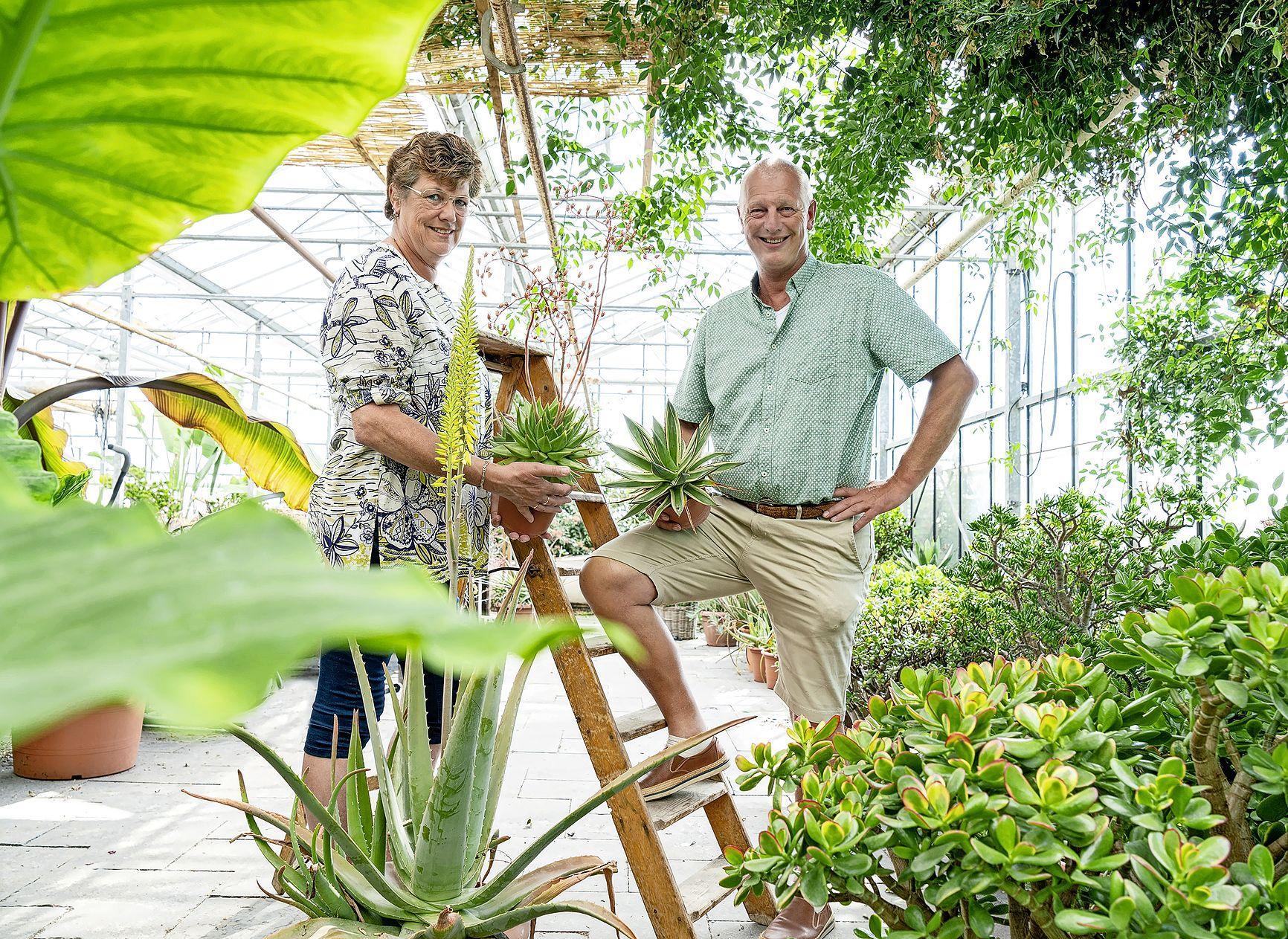 Een leven als in een film. Gerard van Langen stopte als tomatenteler en werd de grootste vetplantenkweker ter wereld