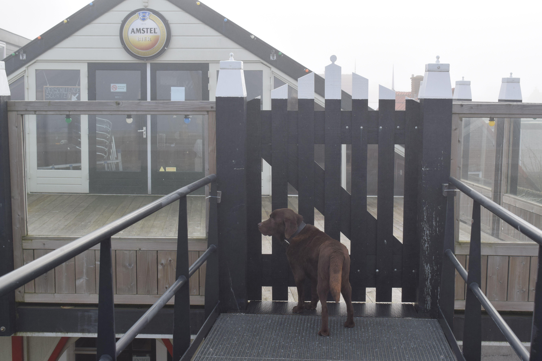 Ook bruine labrador Brum wil dolgraag weer even de kroeg in