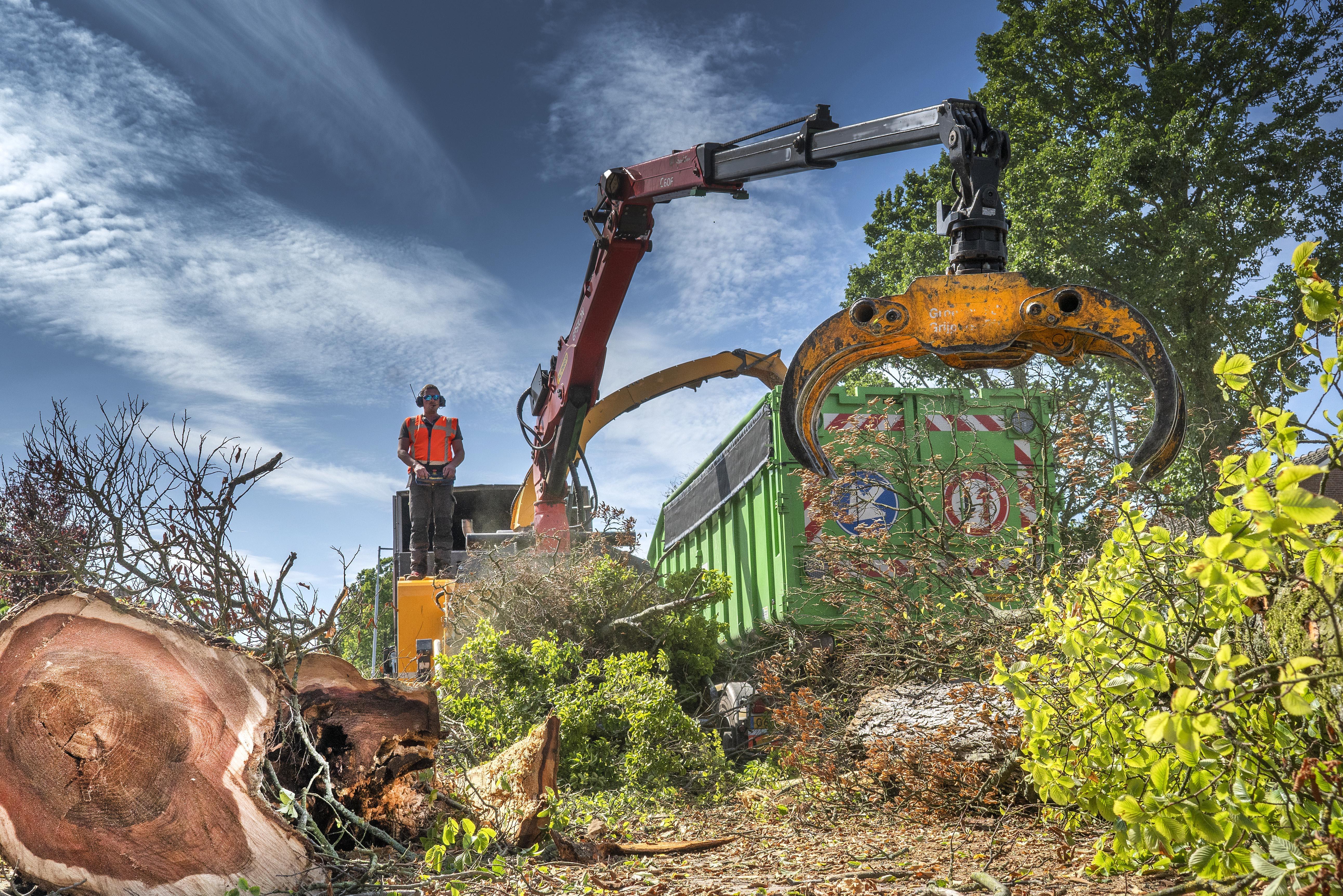 Om de iepziekte het hoofd te bieden, gaat gemeente Den Helder vanaf juni zieke bomen kappen