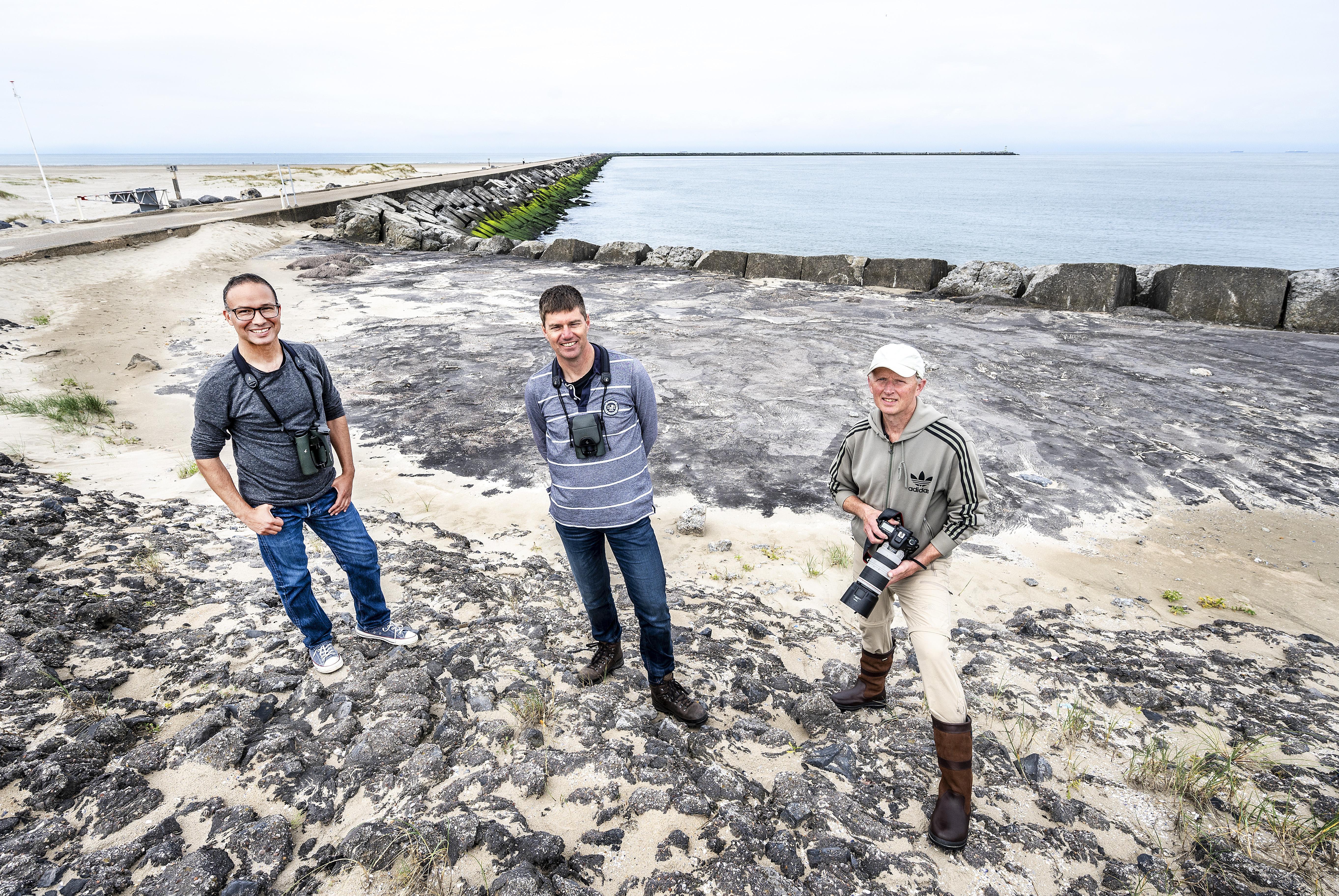 Zestig procent van alle Nederlandse vogels te zien op de Zuidpier in IJmuiden aan Zee: 'Vogels kijken is investeren in herinneringen'