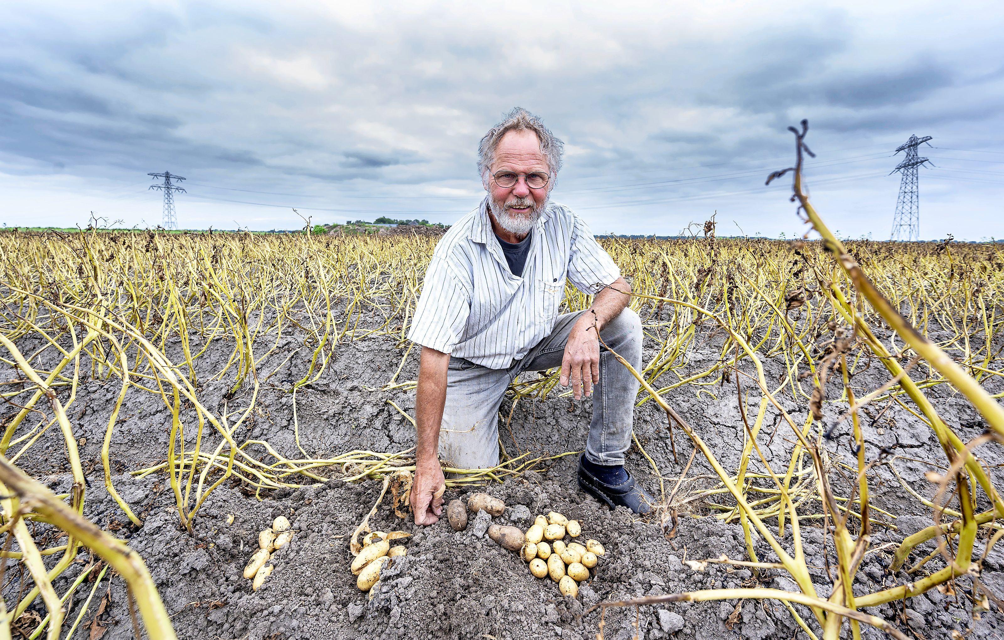 Aardappeloogst gaat in vlammen op door schimmelziekte: als de planten eenmaal besmet zijn is er geen houden aan